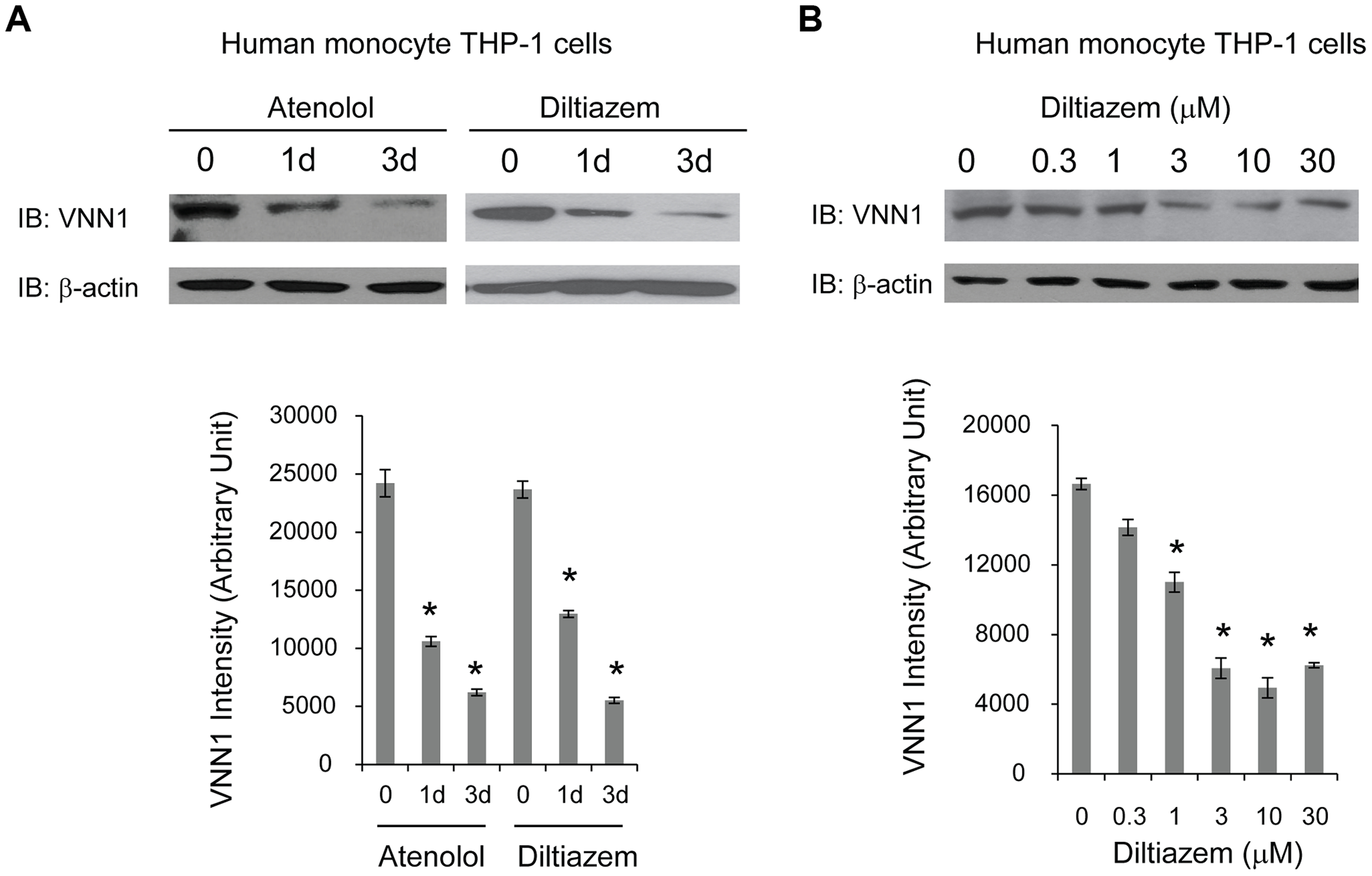 HTN drugs decrease endogenous vanin-1 protein level.