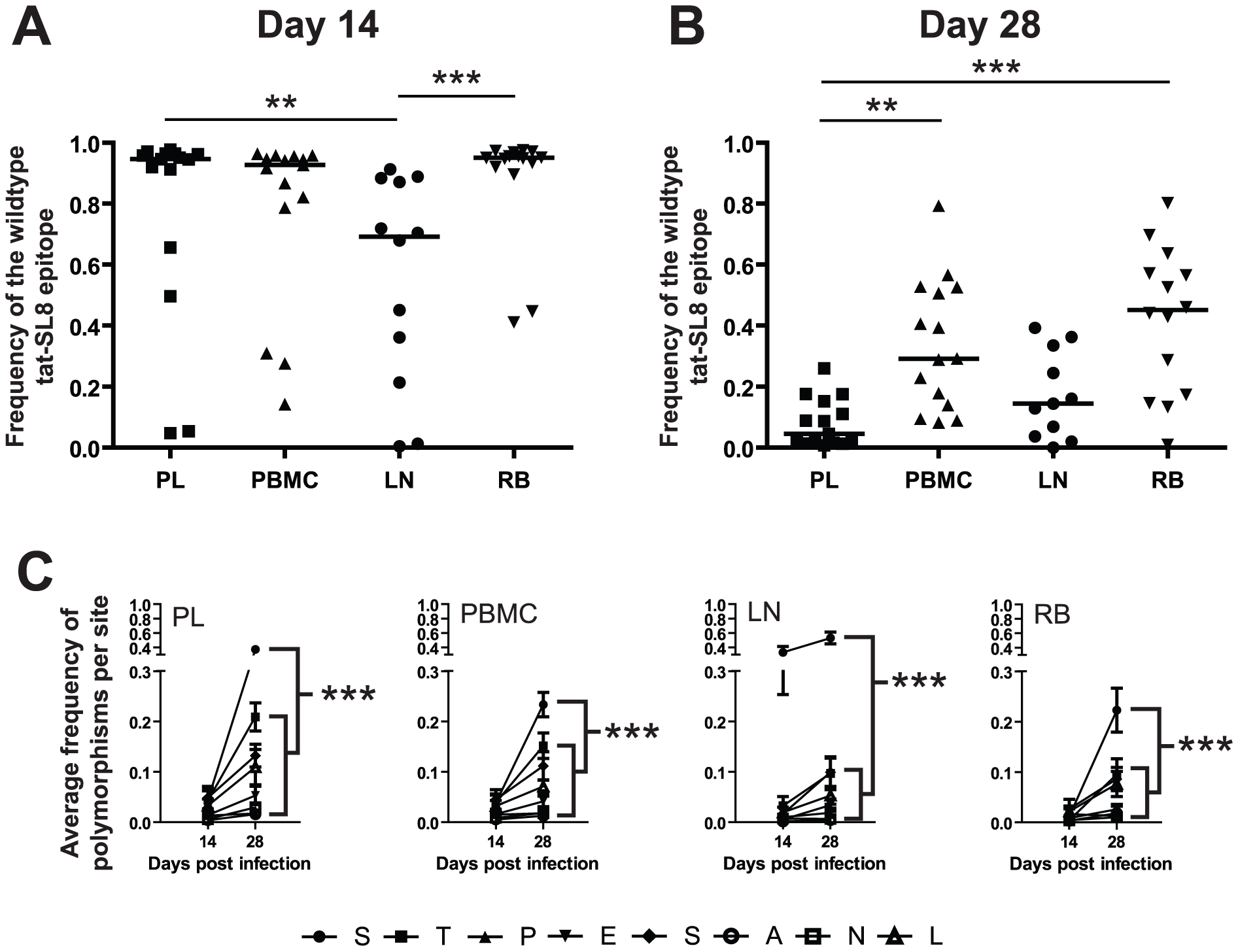 Escape in tat-SL8 was most evident in LN at day 14 post infection and variants generated there had spread to other tissues by day 28 post infection.