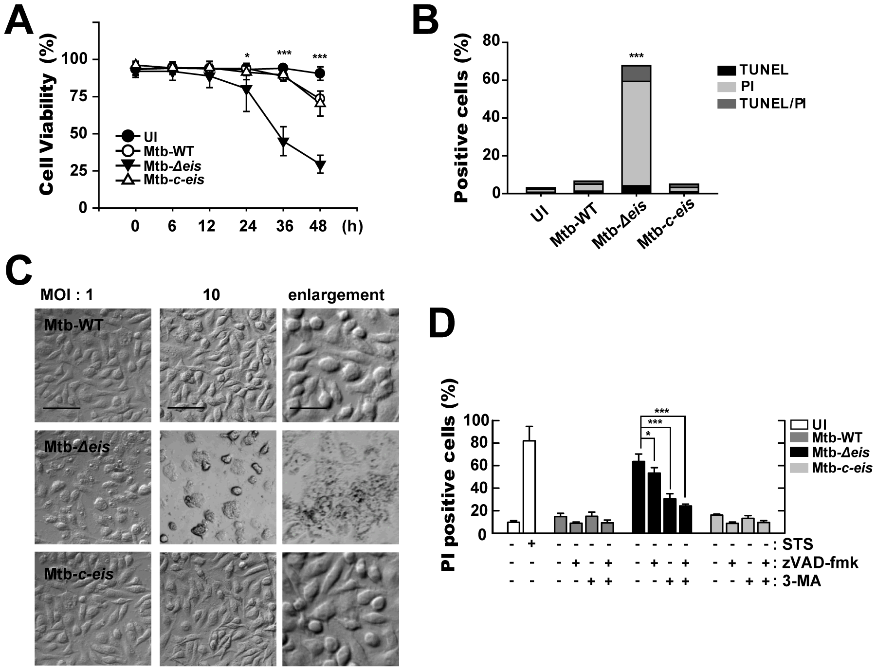 Macrophages infected with Mtb-<i>Δeis</i> show reduced cell viability and increased caspase-independent cell death.