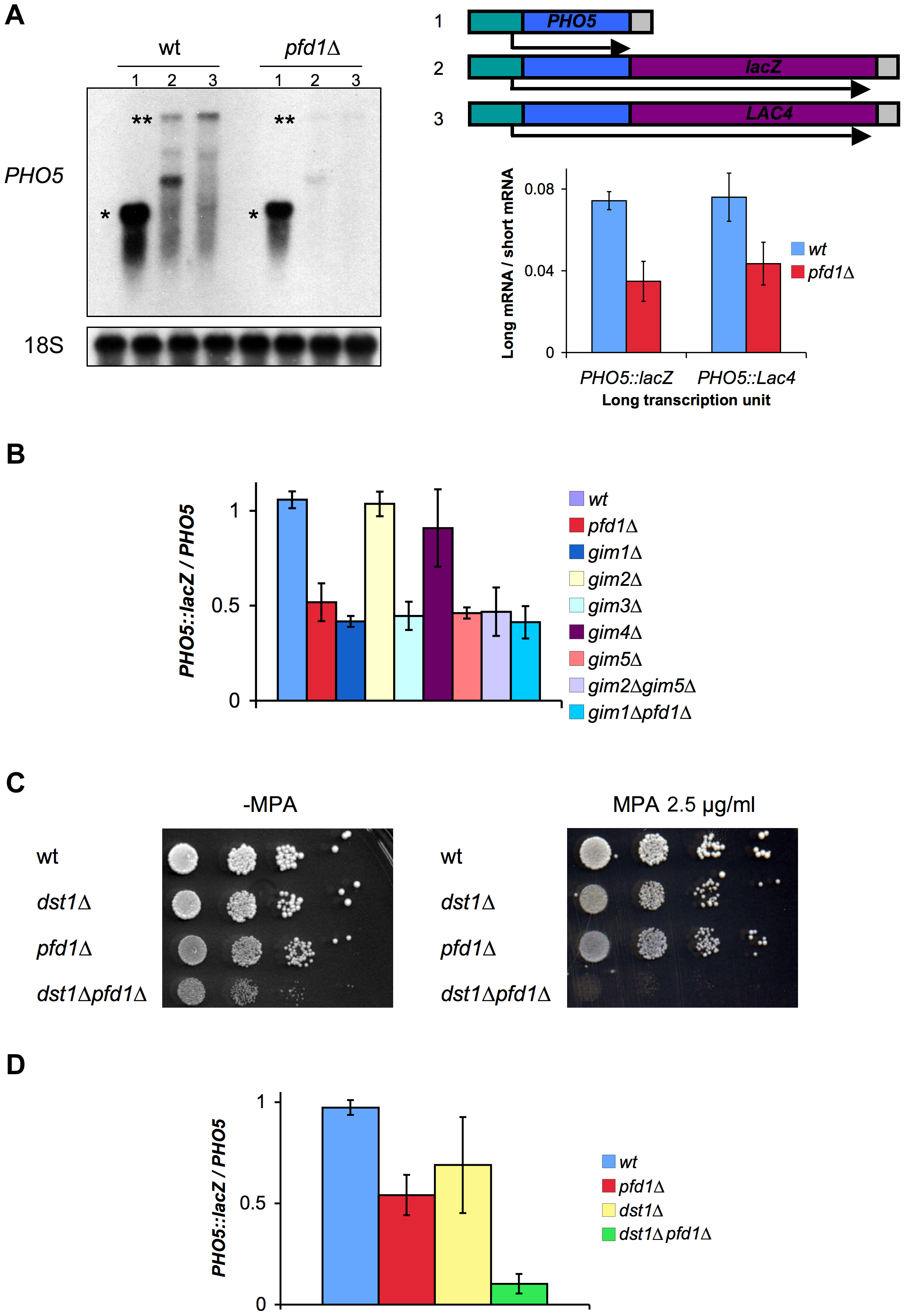 Prefoldin mutants exhibit transcriptional phenotypes and synthetic interactions with TFIIS.