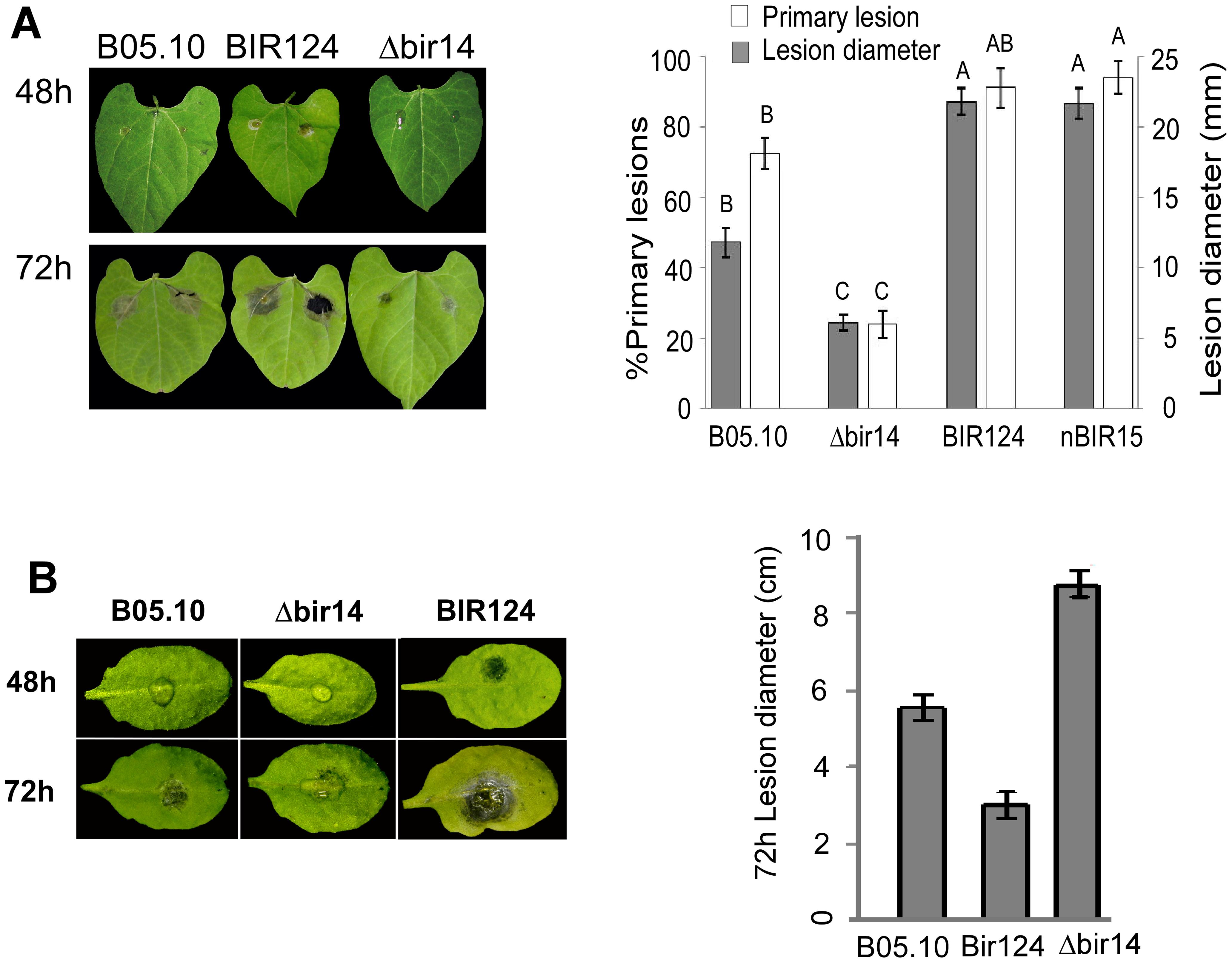 <i>BcBIR1</i> mutant strains are affected in pathogenicity.