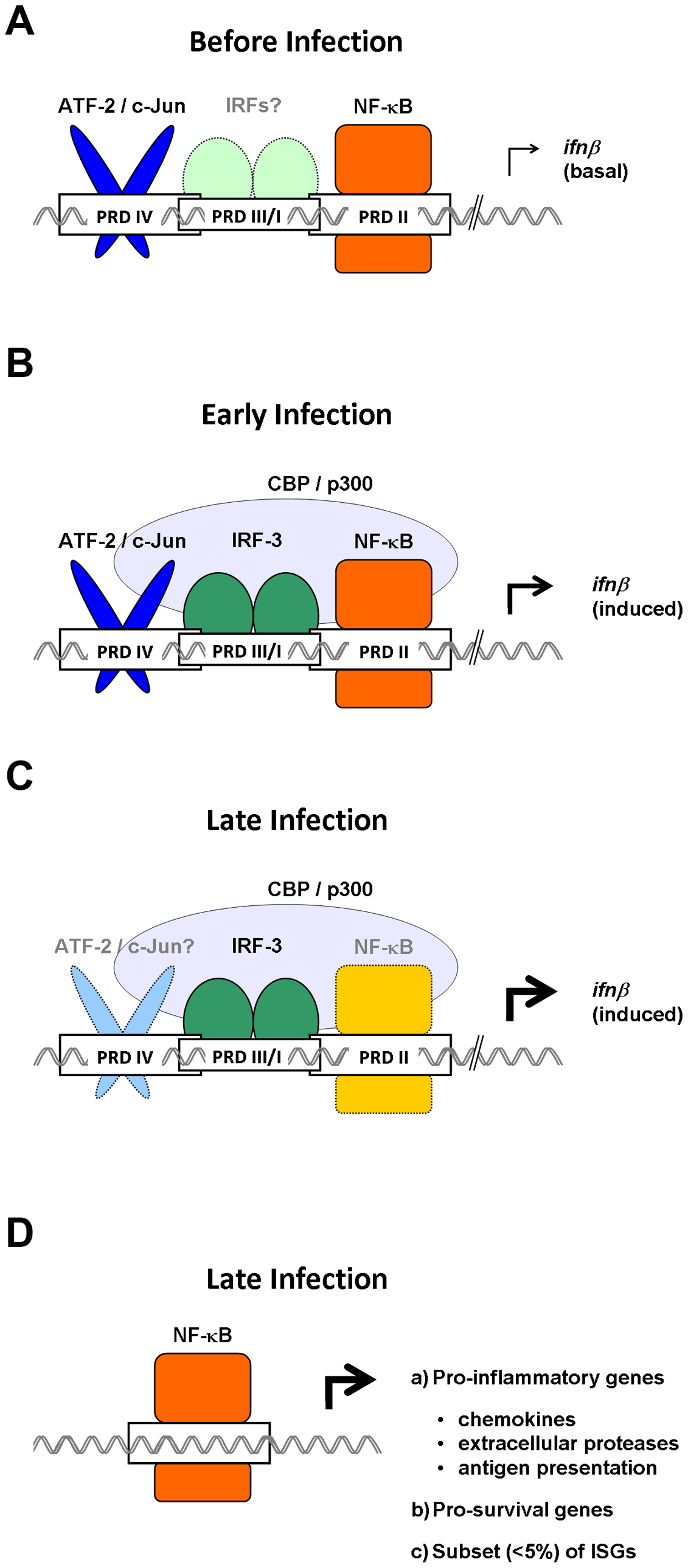 Temporally distinct roles for NF-κB in antivirus innate immune responses.