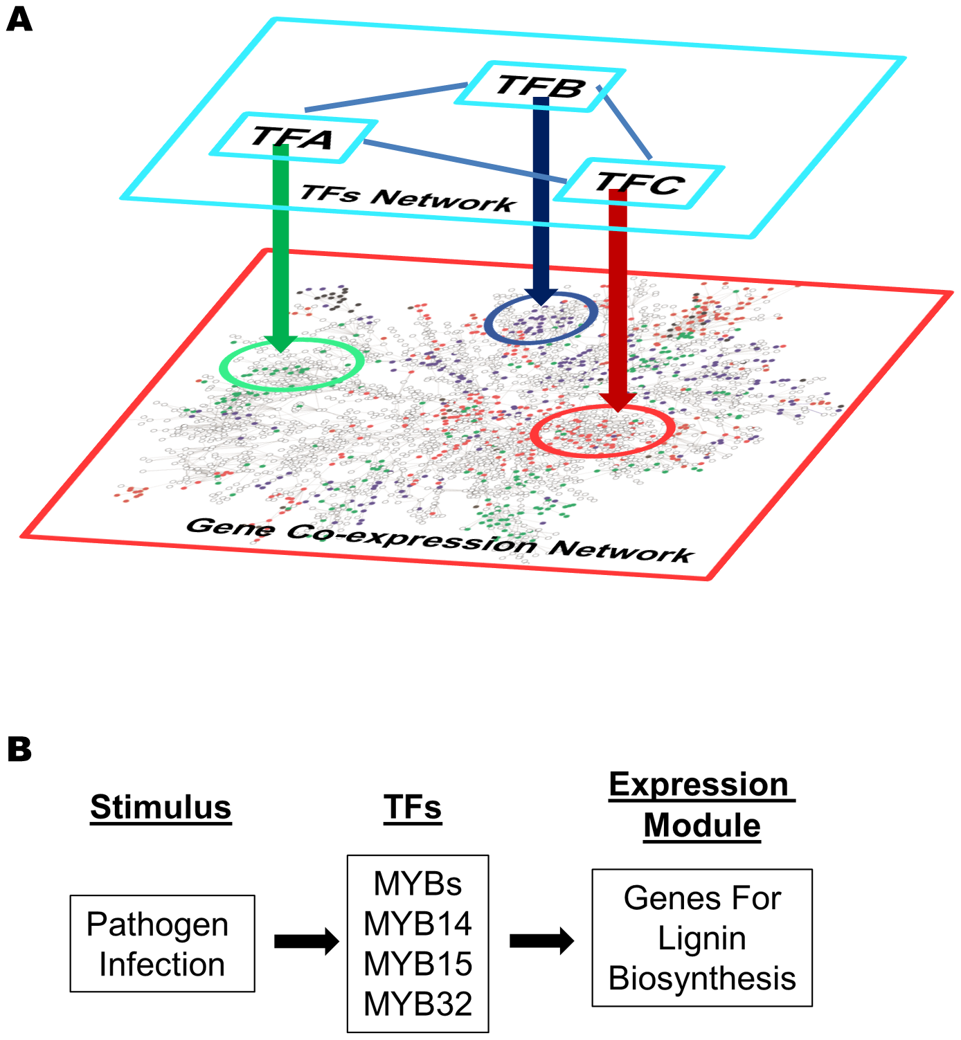 Gene expression modules regulated by transcription factors in a gene co-expression network.