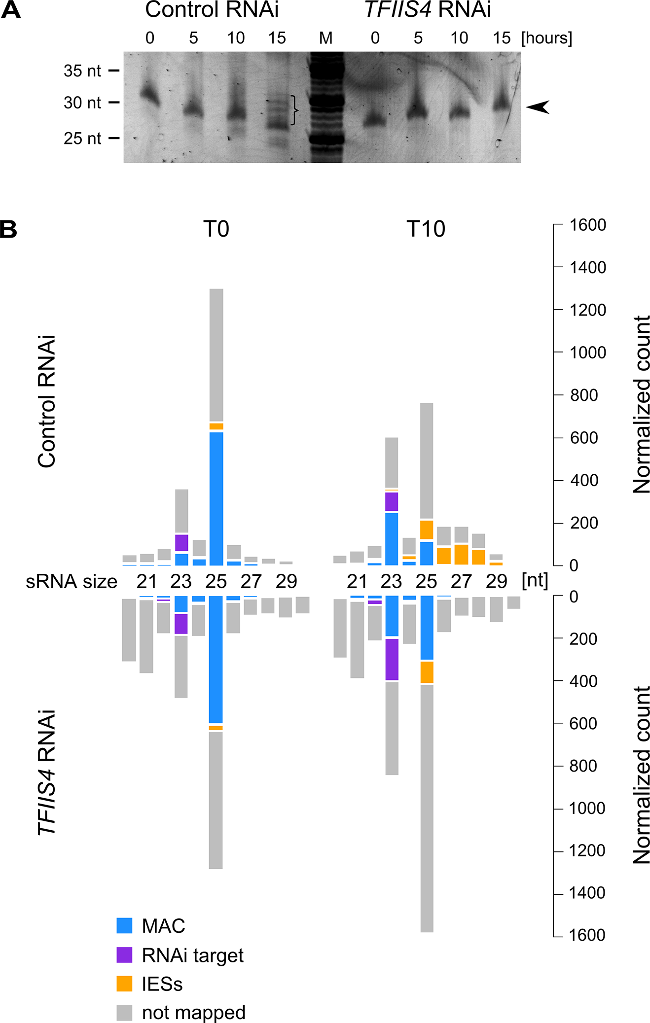 Analysis of sRNA populations in <i>TFIIS4</i>-silenced cells.
