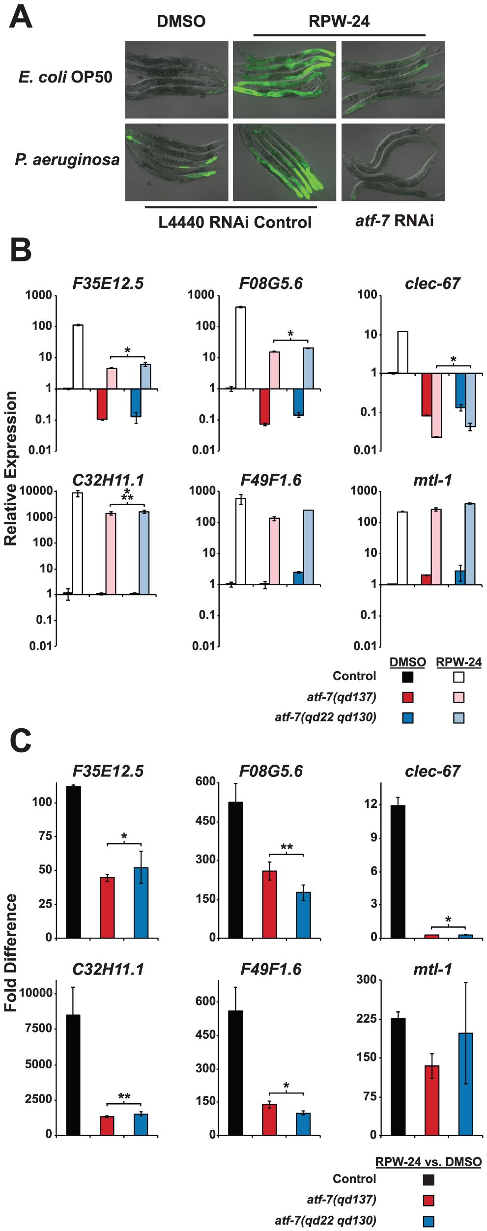 The <i>C. elegans</i> transcription factor ATF-7 regulates immune gene induction by RPW-24.