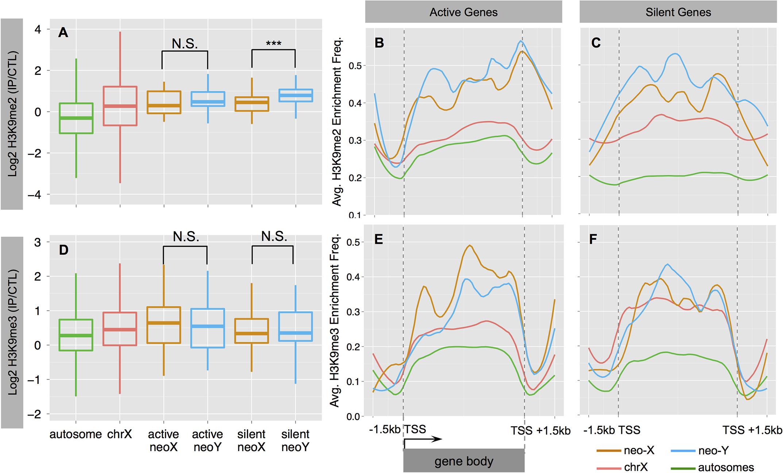 Heterochromatin evolution on the <i>D</i>. <i>busckii</i> neo-Y.