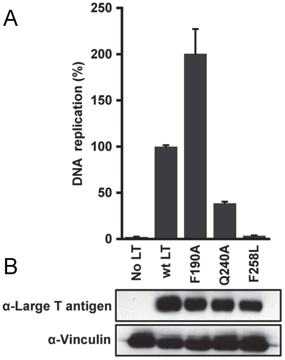 The results of DNA replication studies conducted with full-length JCV T-ag's containing mutations at selected locations.