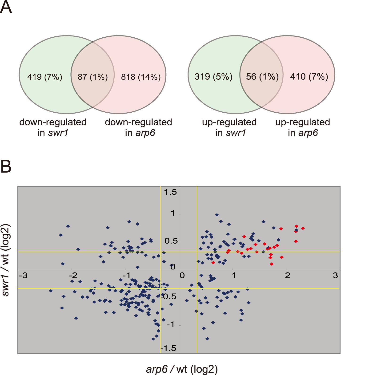Transcript analysis in <i>swr1</i> and <i>arp6</i> mutant cells.