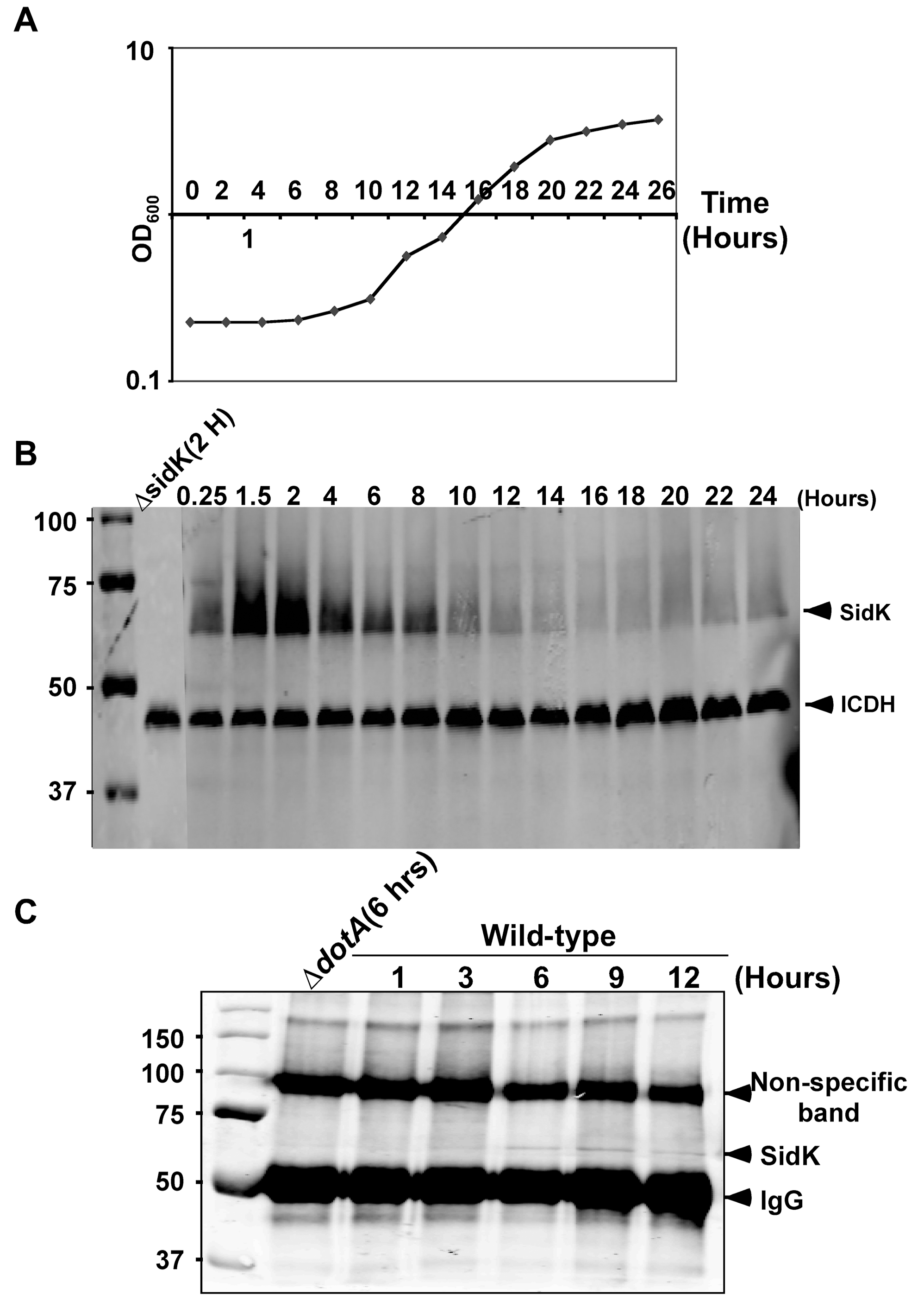 Expression of <i>sidK</i> is induced within hours at the initial phase of bacterial growth.