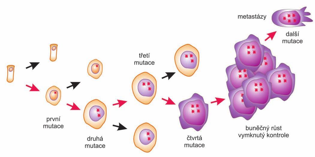 Somatická mutační teorie.
