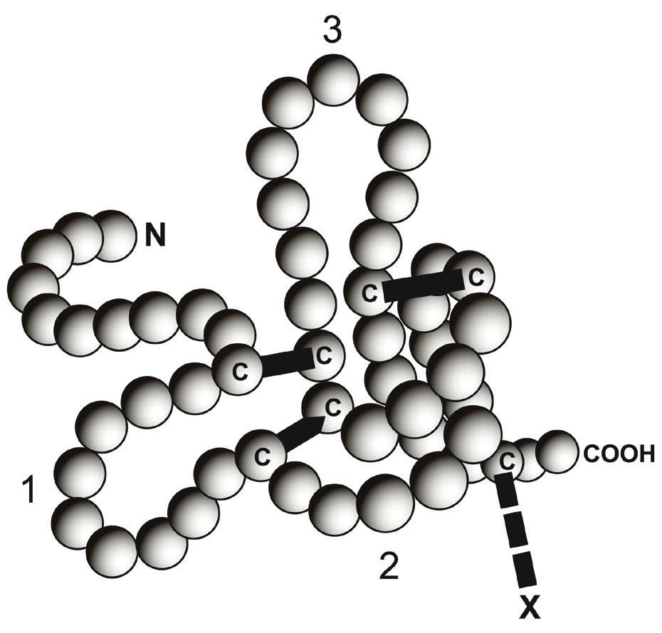 Znázornění jedné molekuly trifolátového peptidu (TFF).