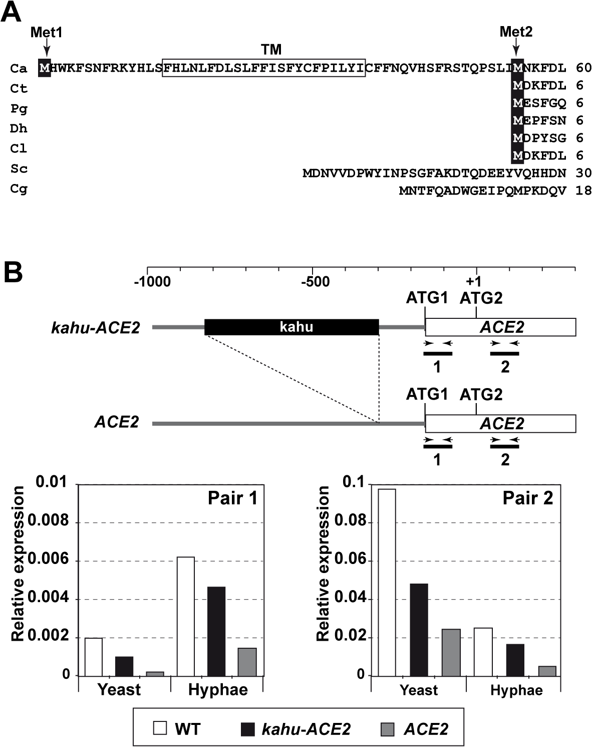 Different mRNAs and proteins are produced from the <i>ACE2</i> locus.