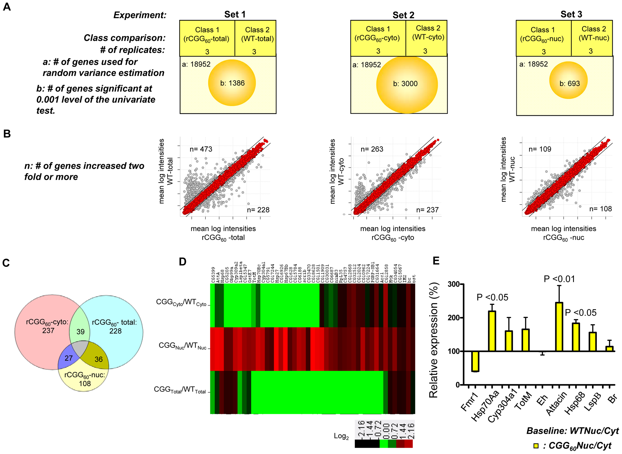 Identification via microarray analyses of selective mRNAs that accumulate in the nucleus as a result of fragile X premutation rCGG repeats.