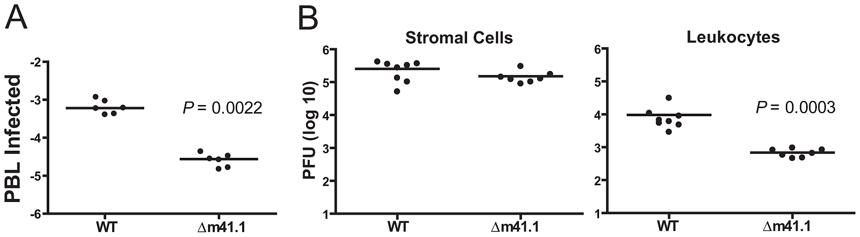 m41.1 enhances viral replication in leukocytes.