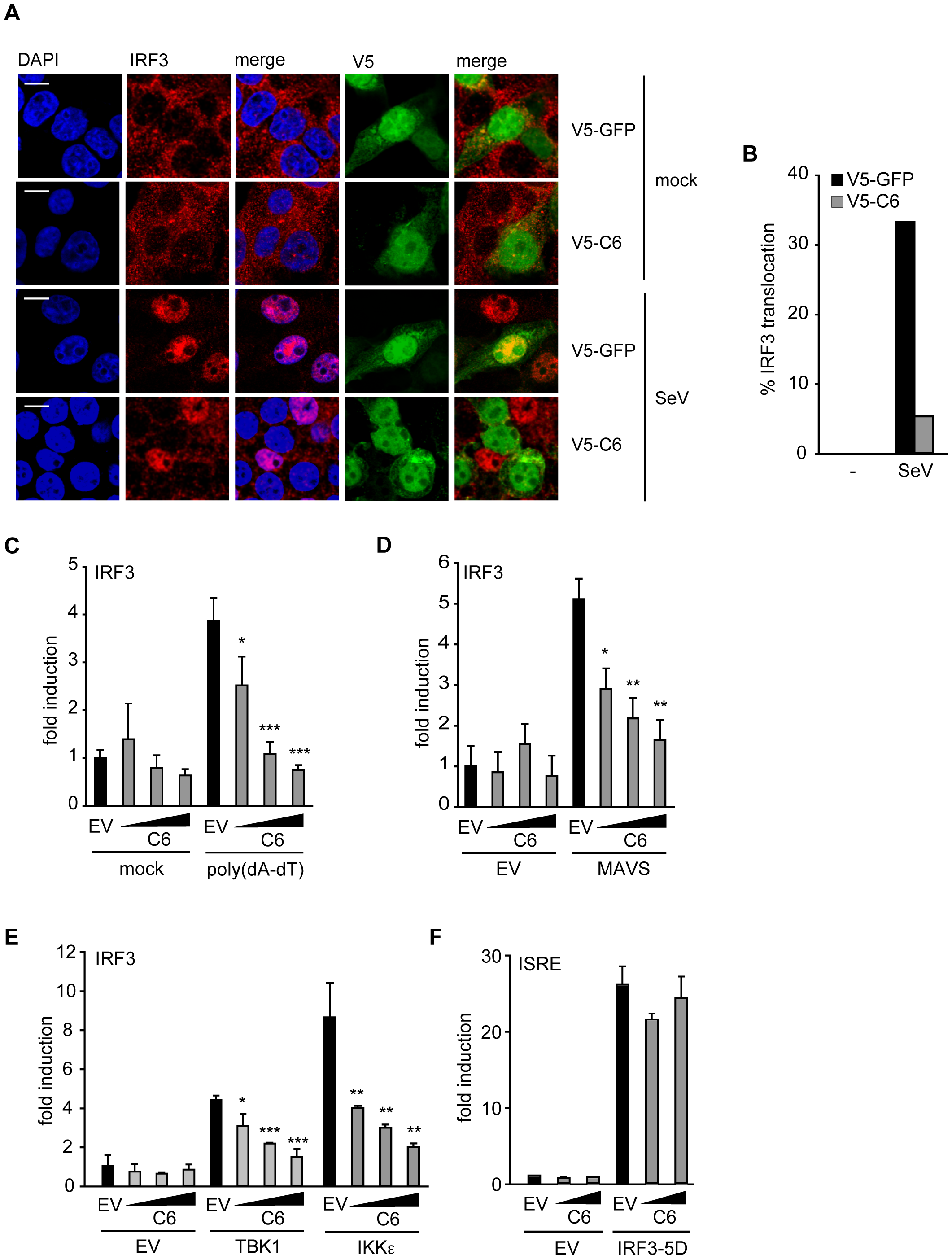 C6 inhibits the nuclear translocation and activation of IRF3.