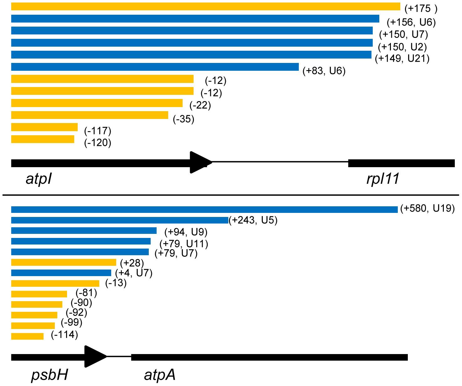 3′ end positions of <i>atpI</i> and <i>psbH</i> circular RT-PCR sequences.
