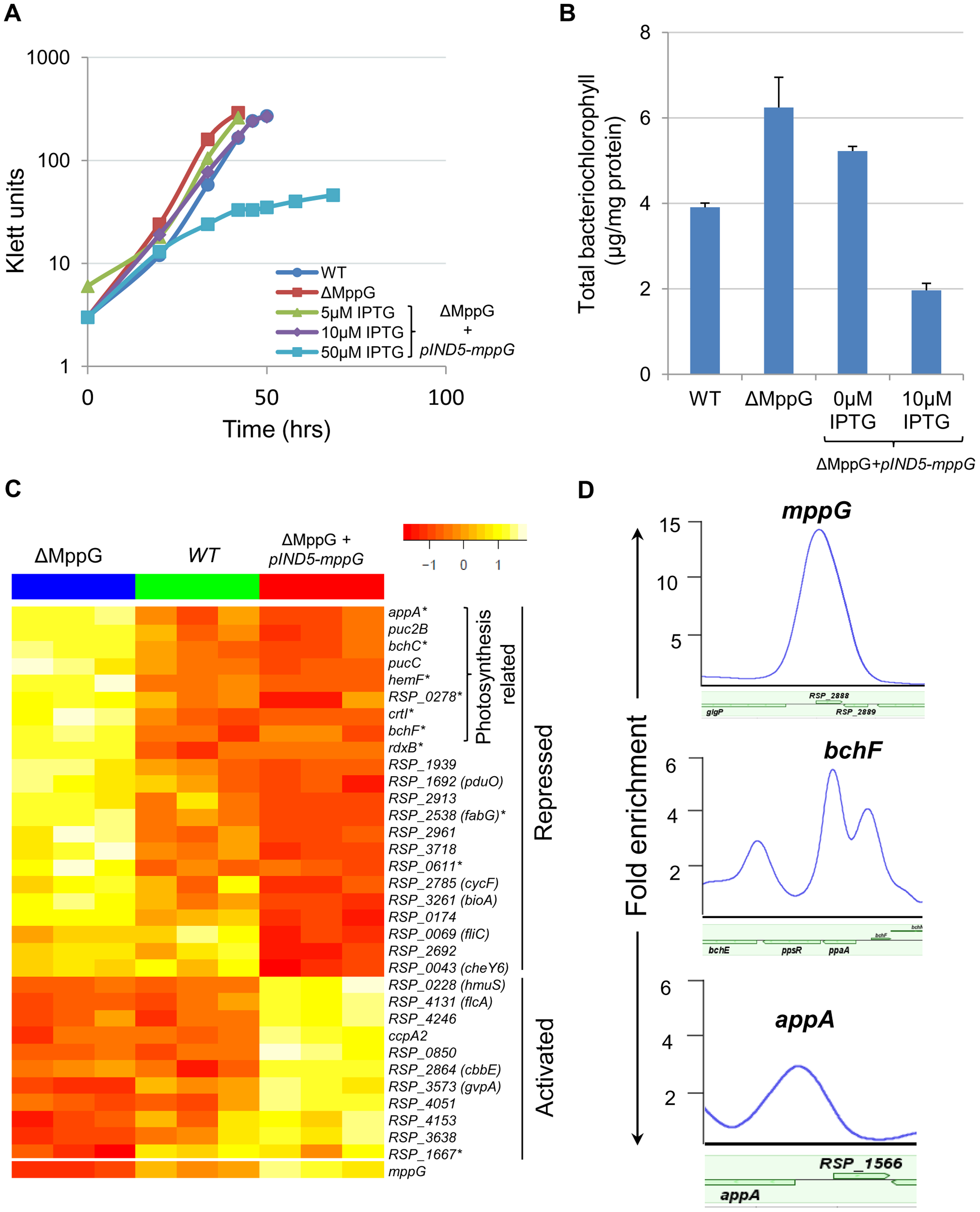 Physiological and genomic analysis of MppG regulation.