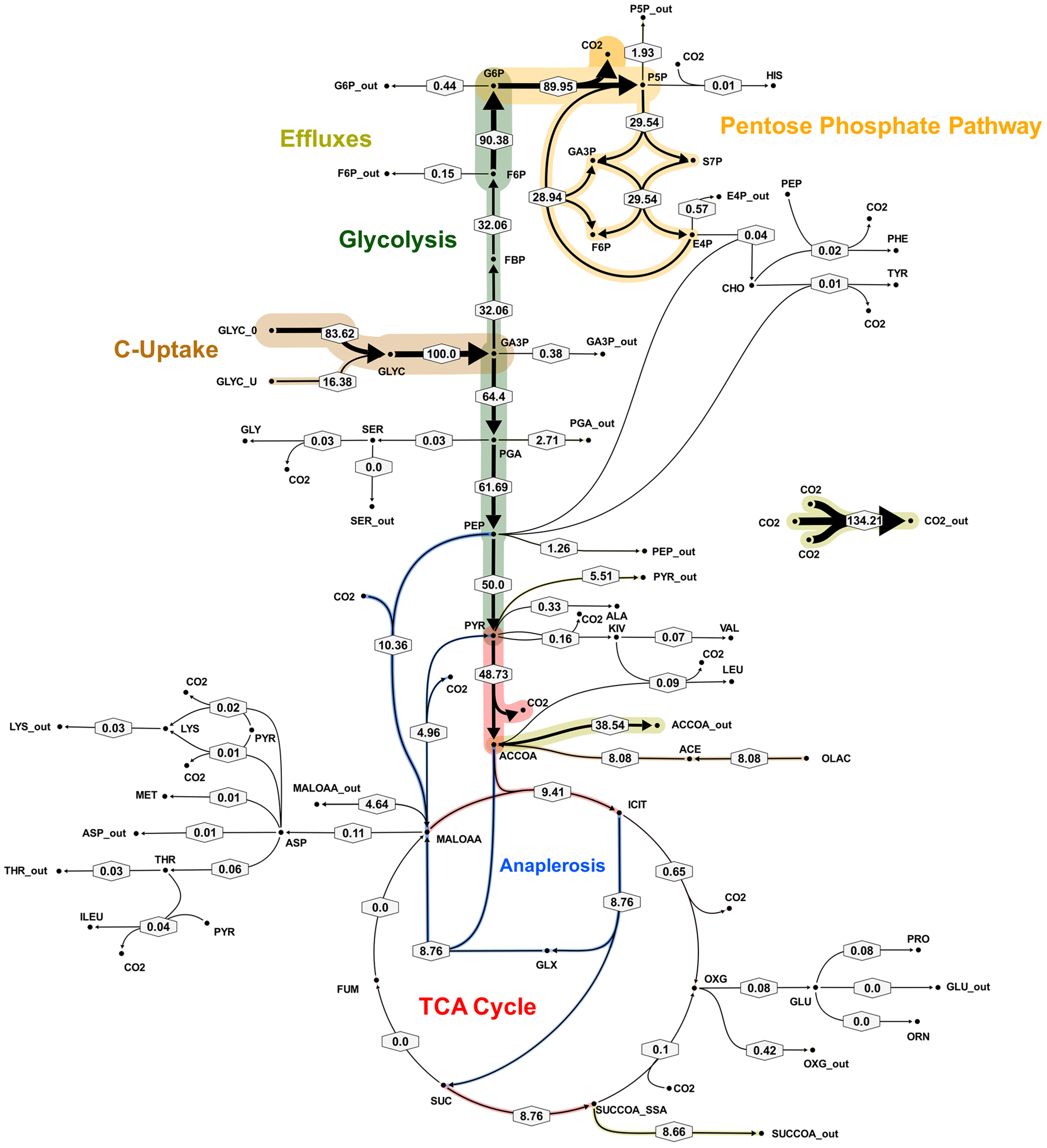 Metabolic flux map corresponding to solution A for <i>M. bovis</i> BCG in glycerol limited continuous culture at slow growth rate (t<sub>d</sub>=69 h).