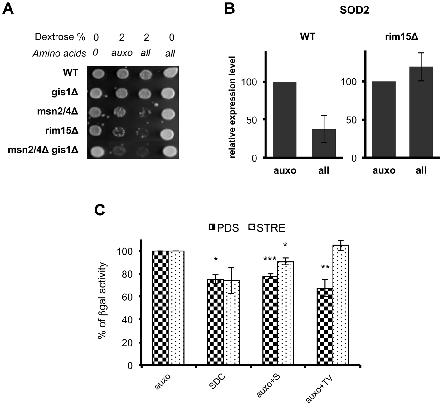 Amino acids affect stress response genes in a Rim15-dependent way.