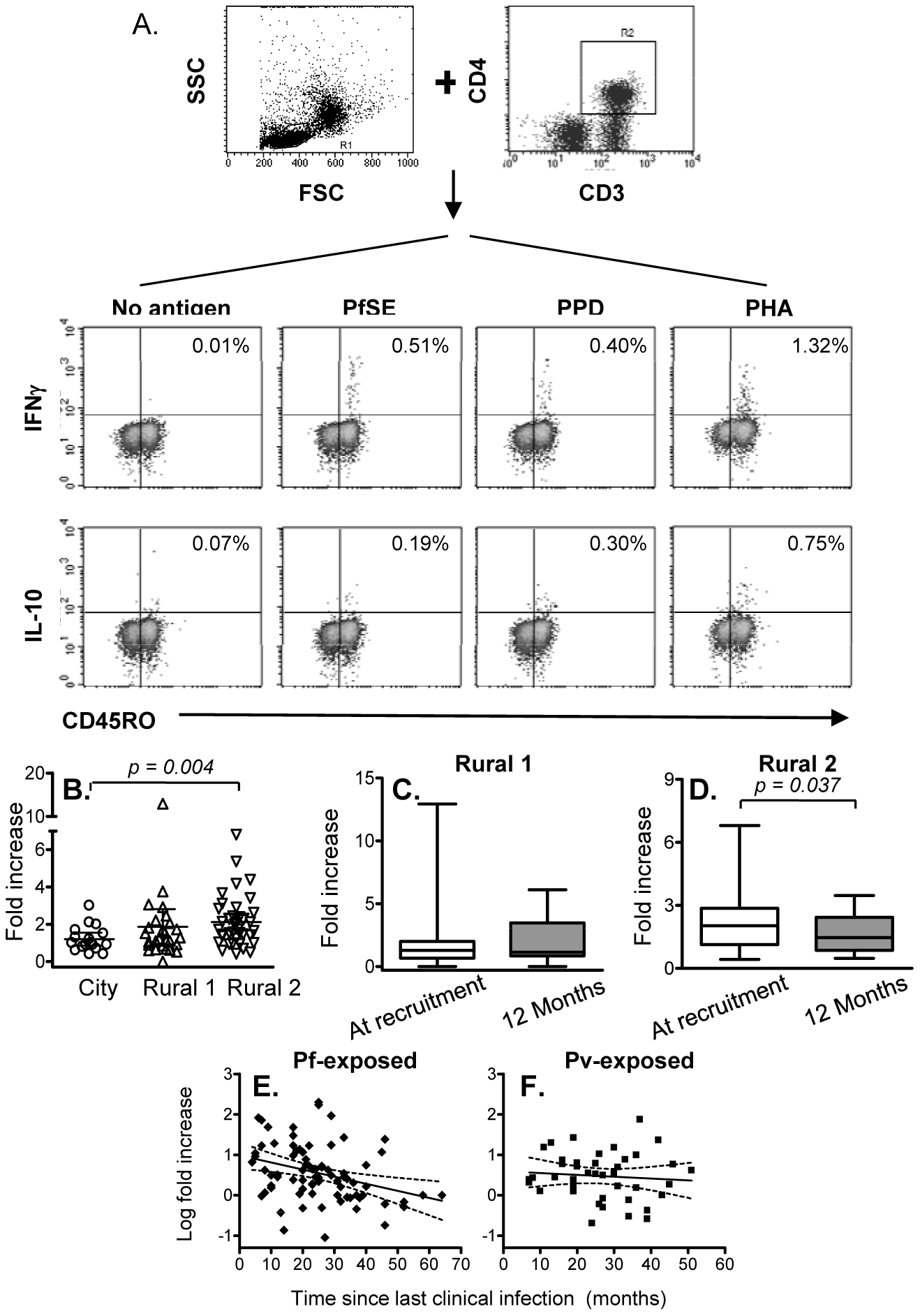 Immediate IFN-γ and IL-10 production by effector memory CD4 T cells.
