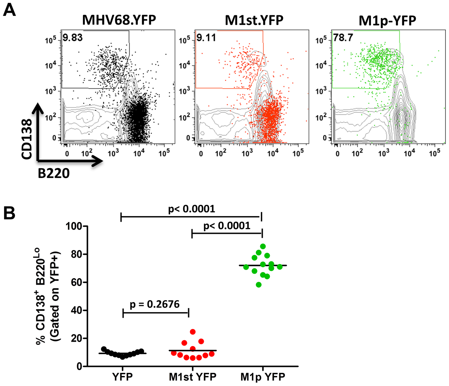 The majority of M1 promoter activity is detected in splenic plasma cells.