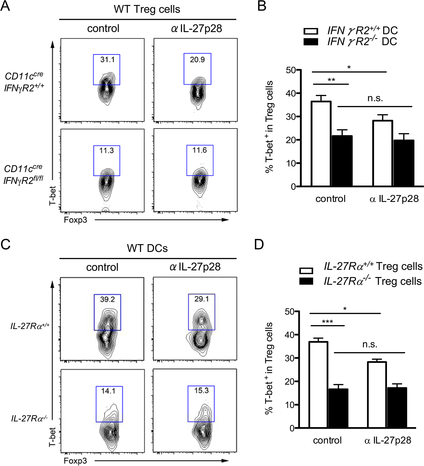 IL-27 secreted from <i>T gondii</i> infected-DC promotes T-bet<sup>+</sup> Th1-Treg cell differentiation through stimulating IL-27R on Treg cells.