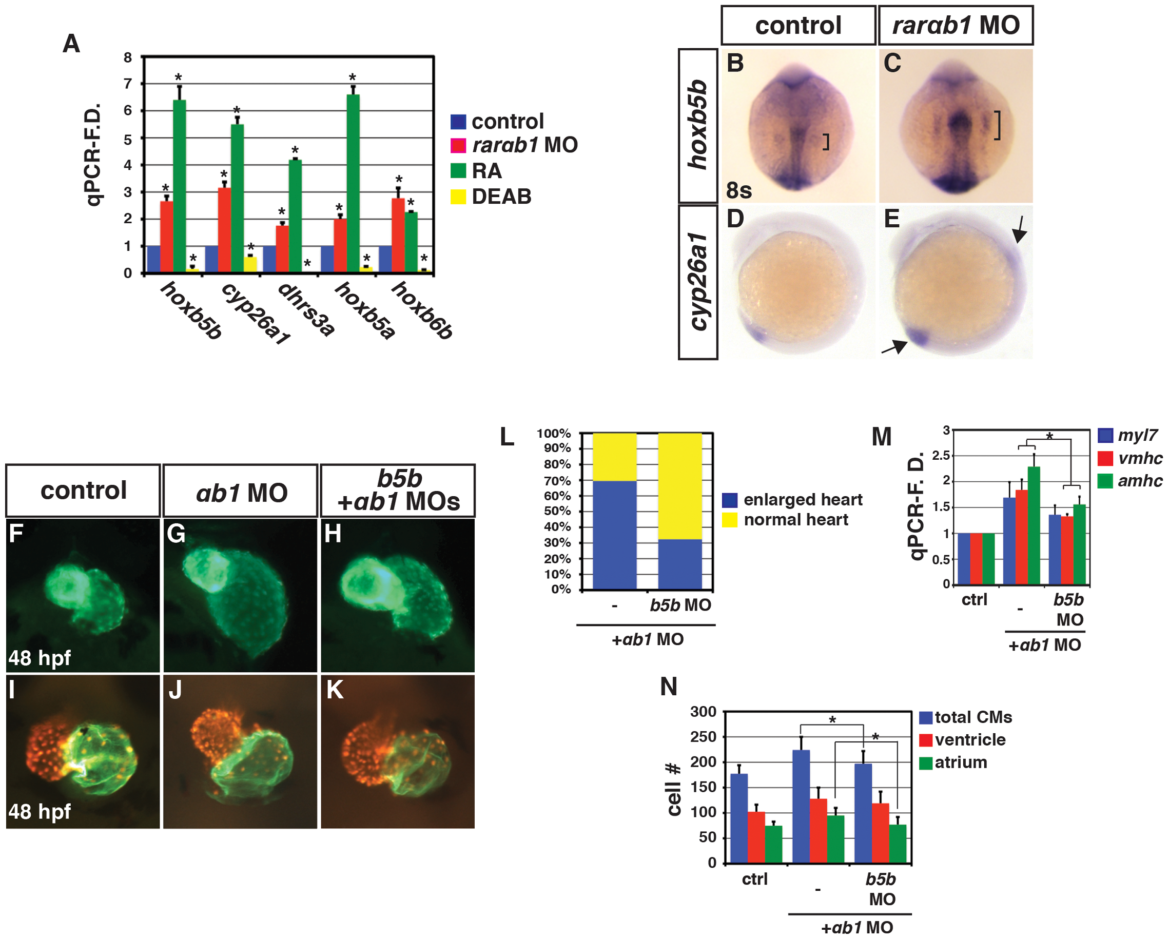 RARαb1 deficient embryos have increased expression of RA signaling responsive genes.
