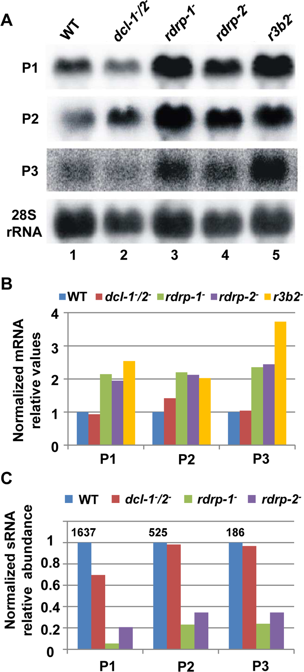 The <i>rdrp</i>-dependent <i>dicer</i>-independent RNA degradation pathway regulates gene expression.