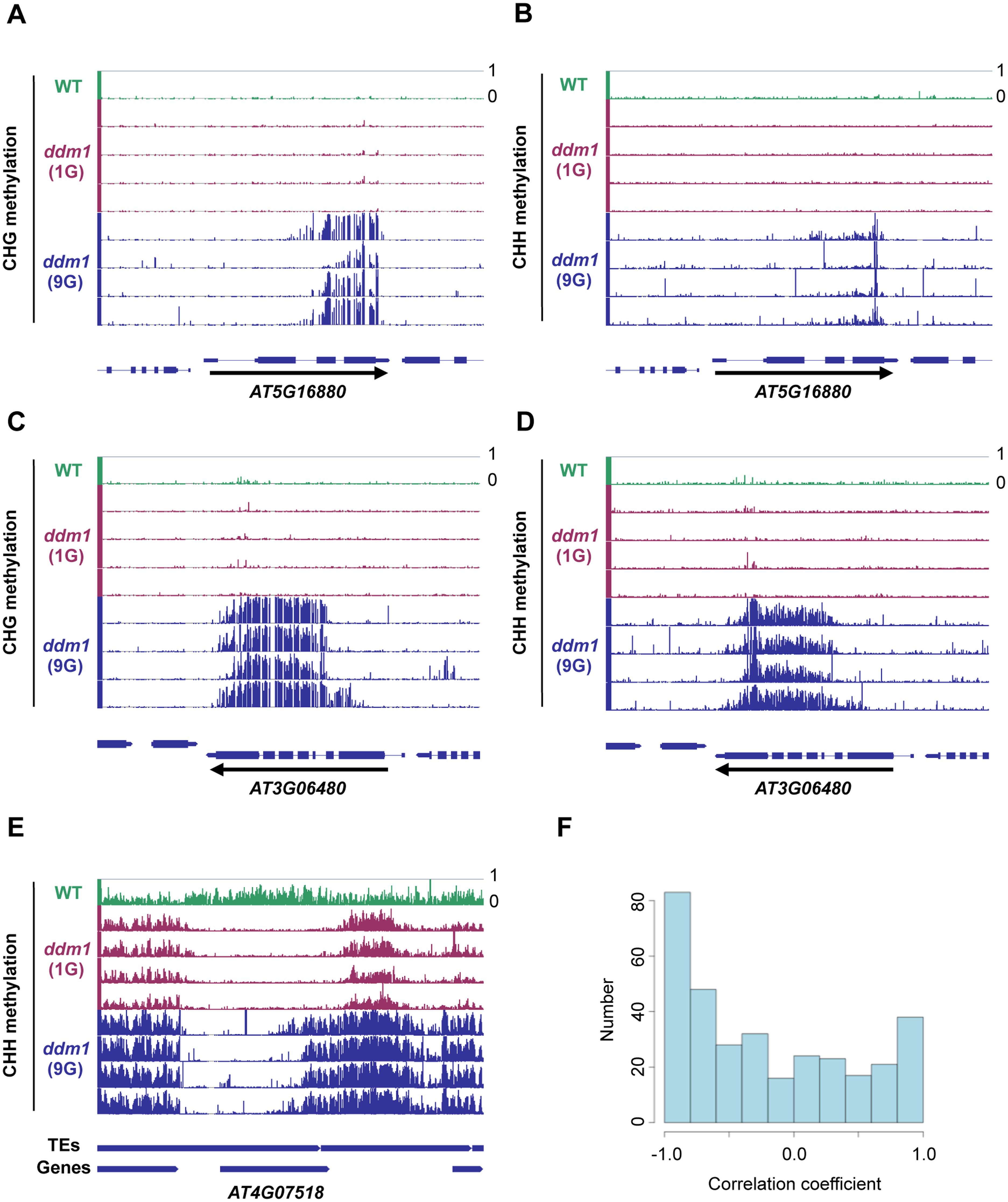 Spread of non-CG methylation in self-pollinated <i>ddm1</i> mutants.