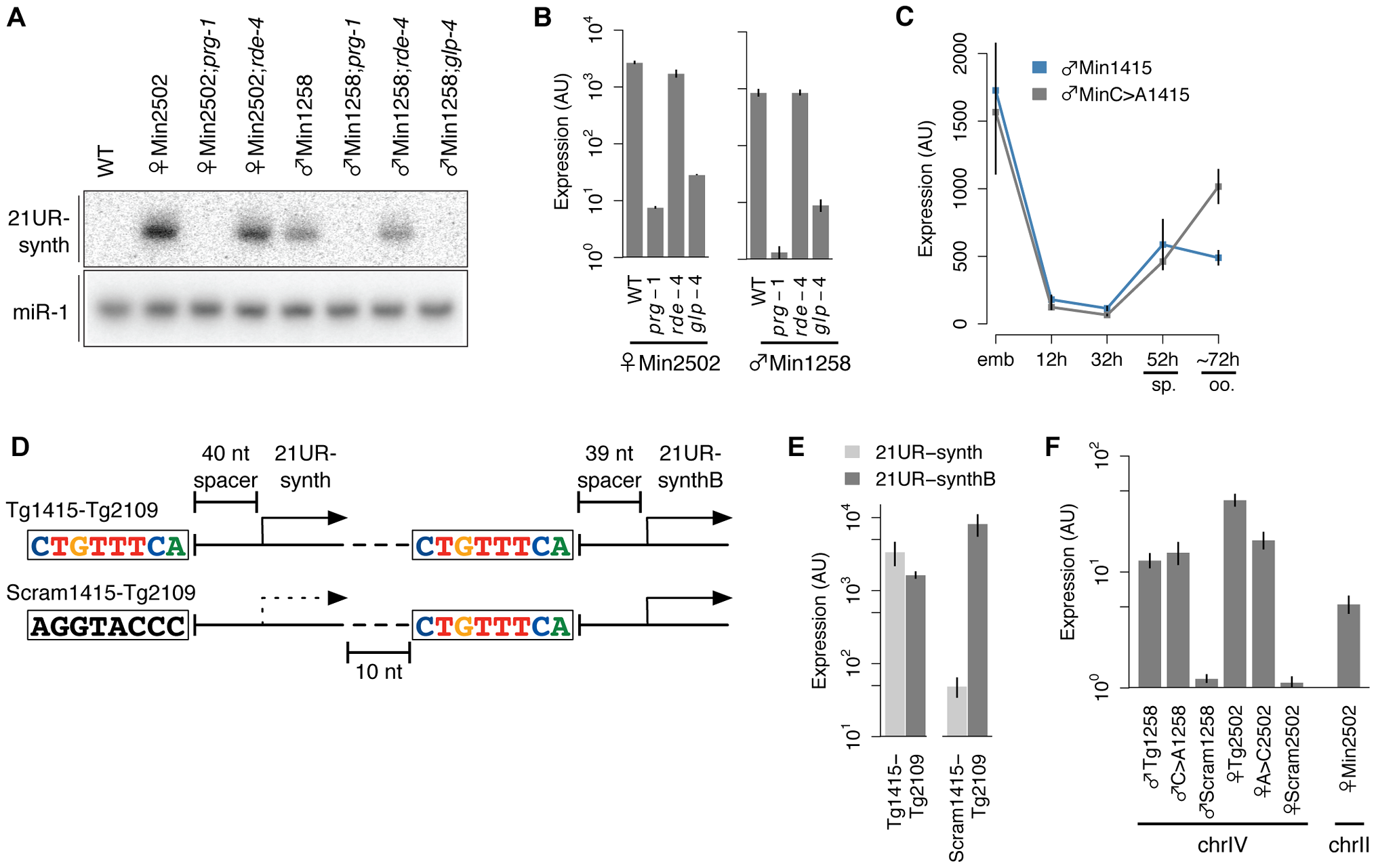 21U RNAs represent independent transcriptional units.