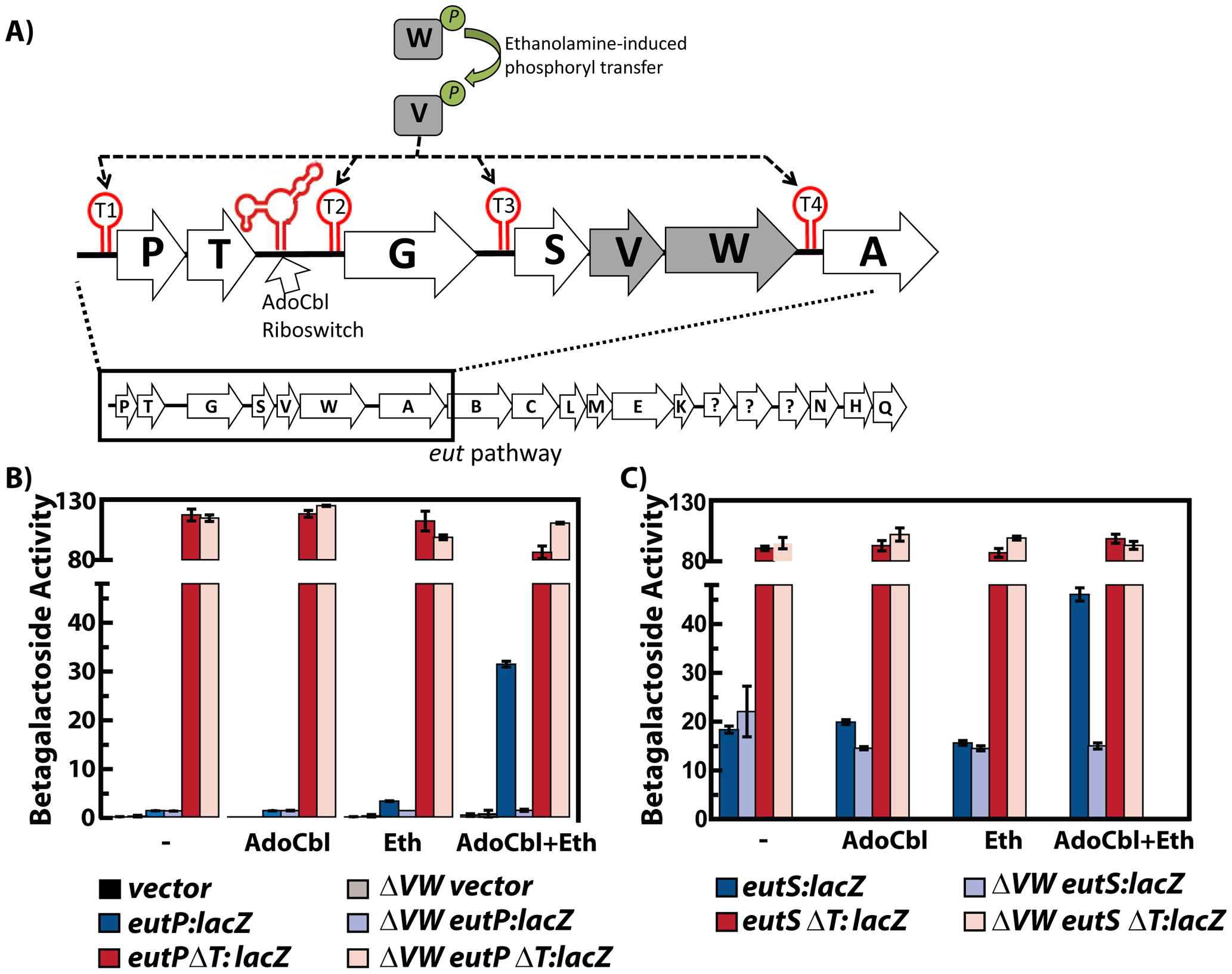 Multiple input signals, along with protein and RNA elements, regulate the <i>eut</i> locus in <i>Enterococcus faecalis</i>.