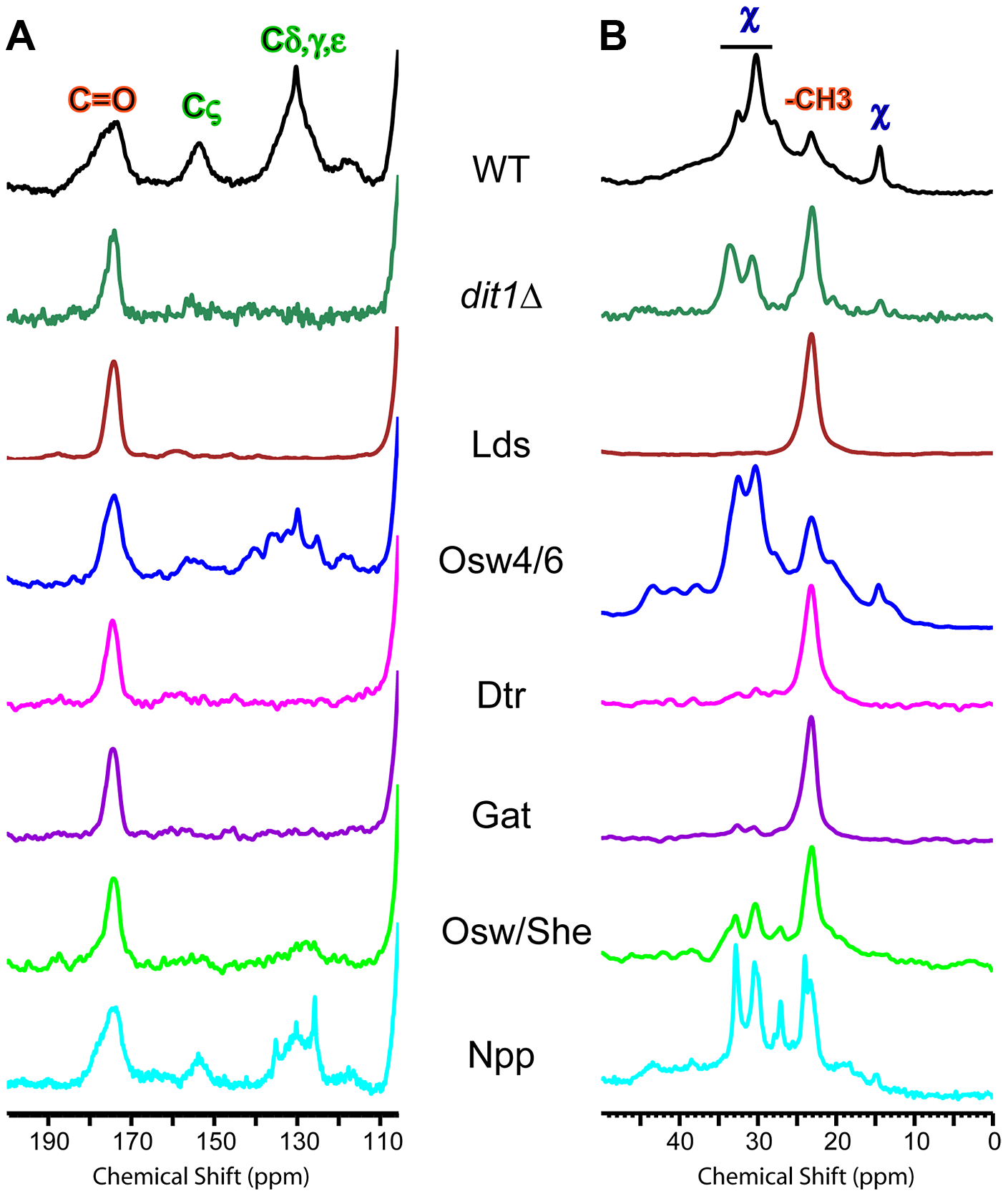 NMR analysis of outer spore walls in the paralog mutant strains.