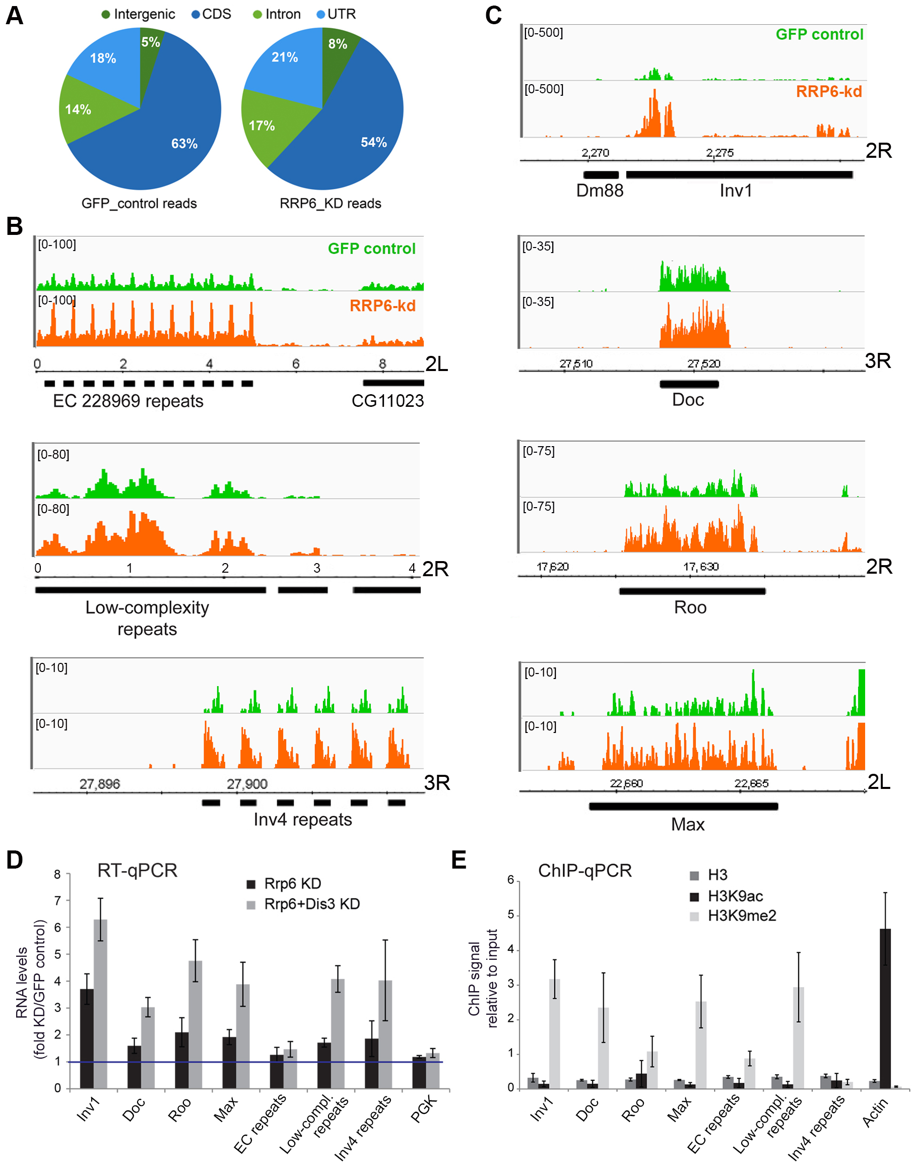 Genome-wide effects of RRP6 depletion on the transcriptome of S2 cells.