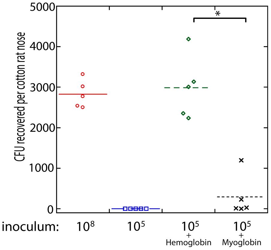 Nasal colonization of <i>S. aureus</i> in the cotton rat model.