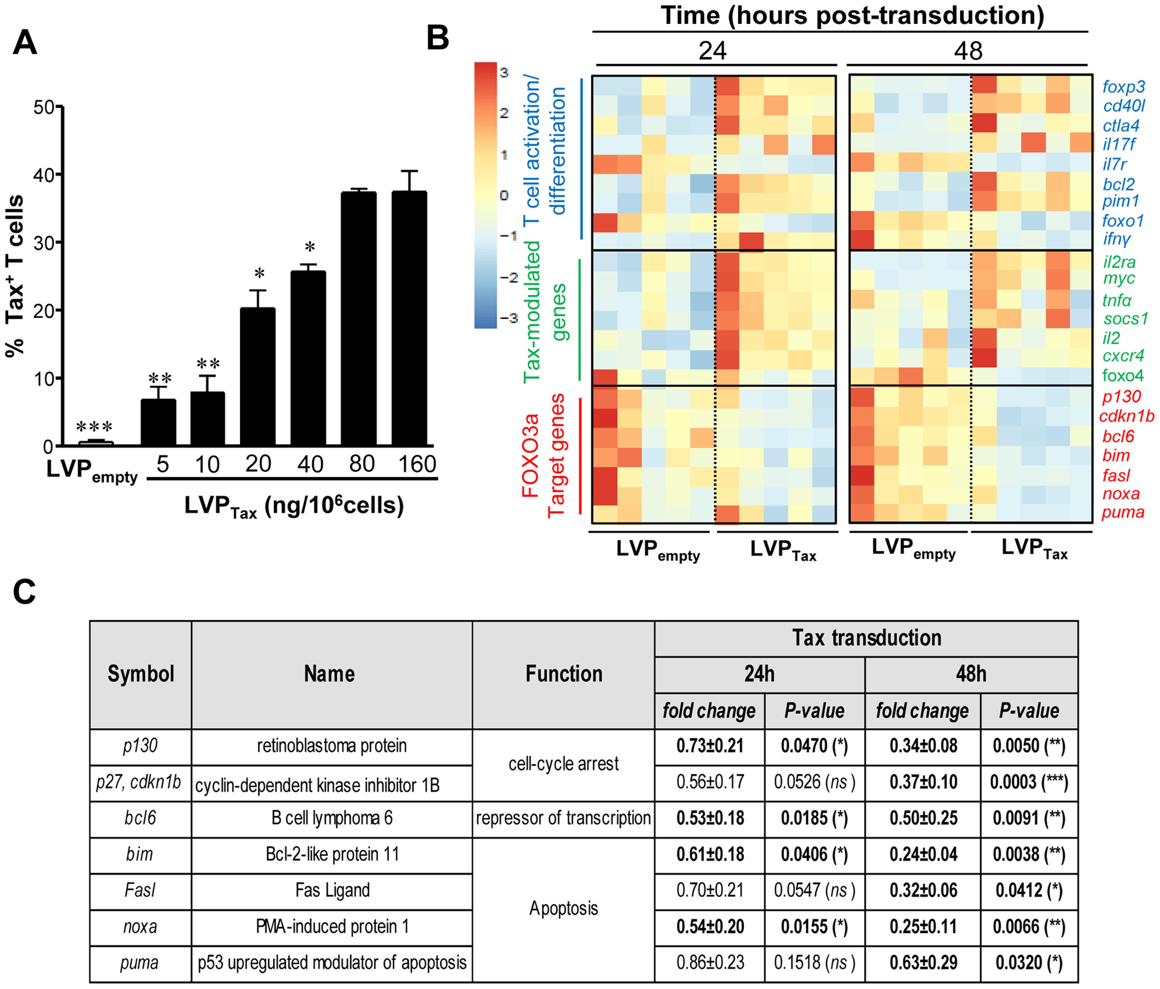 Tax expression inhibits FOXO3a activity <i>via</i> activation of AKT.