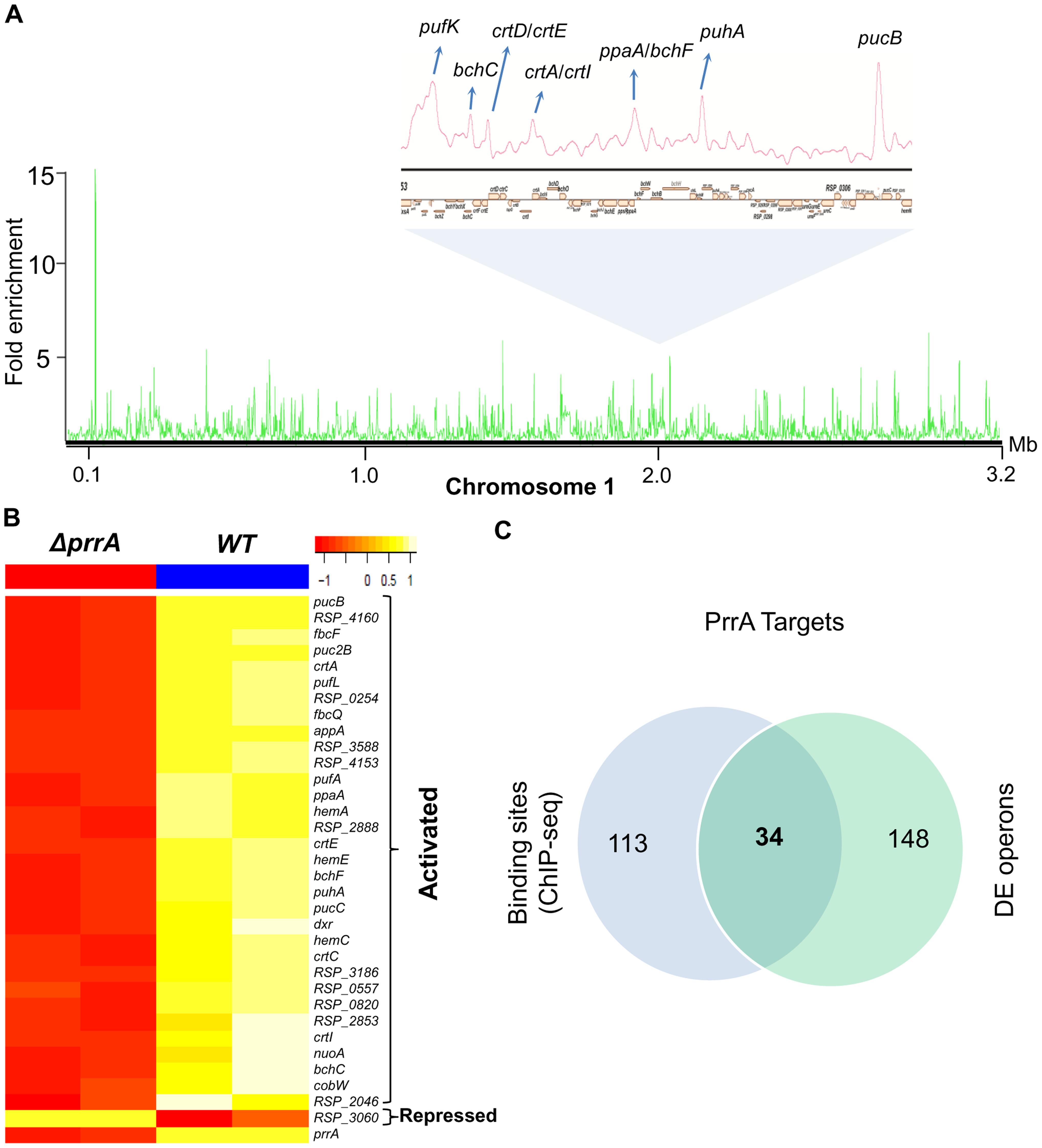 Analysis of the PrrA regulon in <i>R. sphaeroides</i>.
