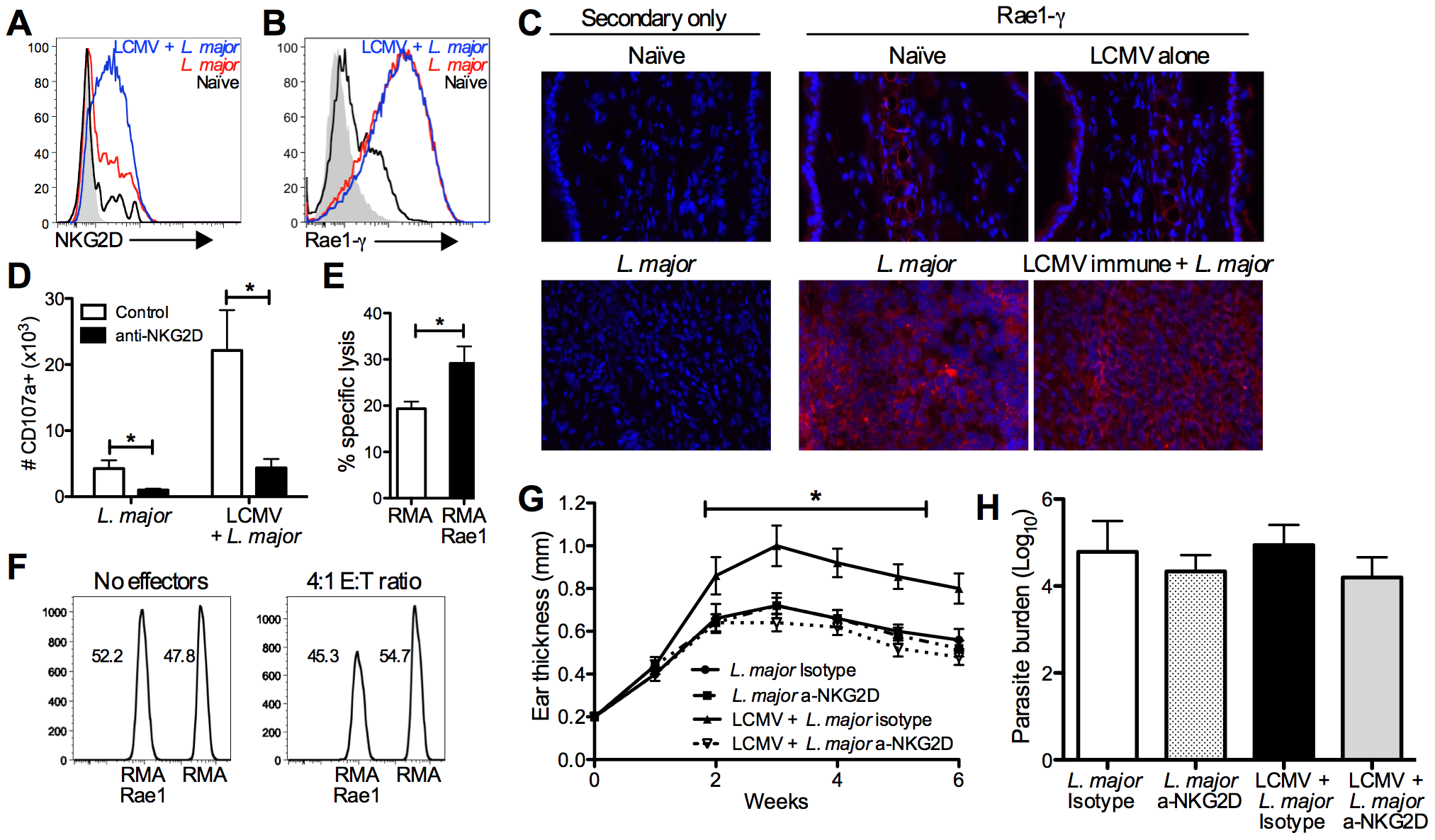 CD8 T cells induce immunopathology through engagement of NKG2D.