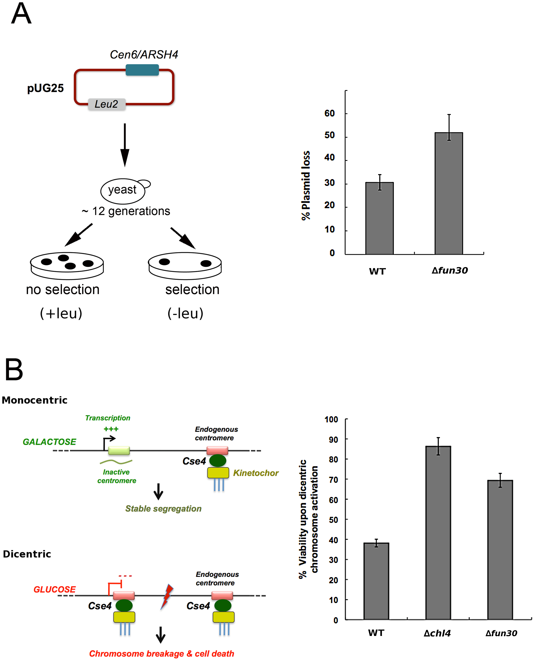 <i>FUN30</i> deletion counteracts viability defects upon formation of a dicentric chromosome.