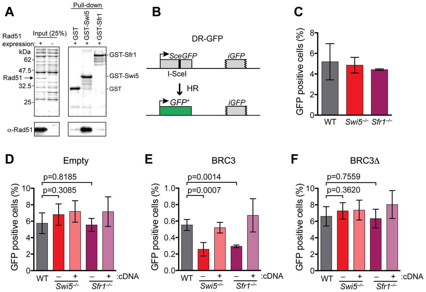 Swi5 and Sfr1 have a role in HR in mammalian cells.