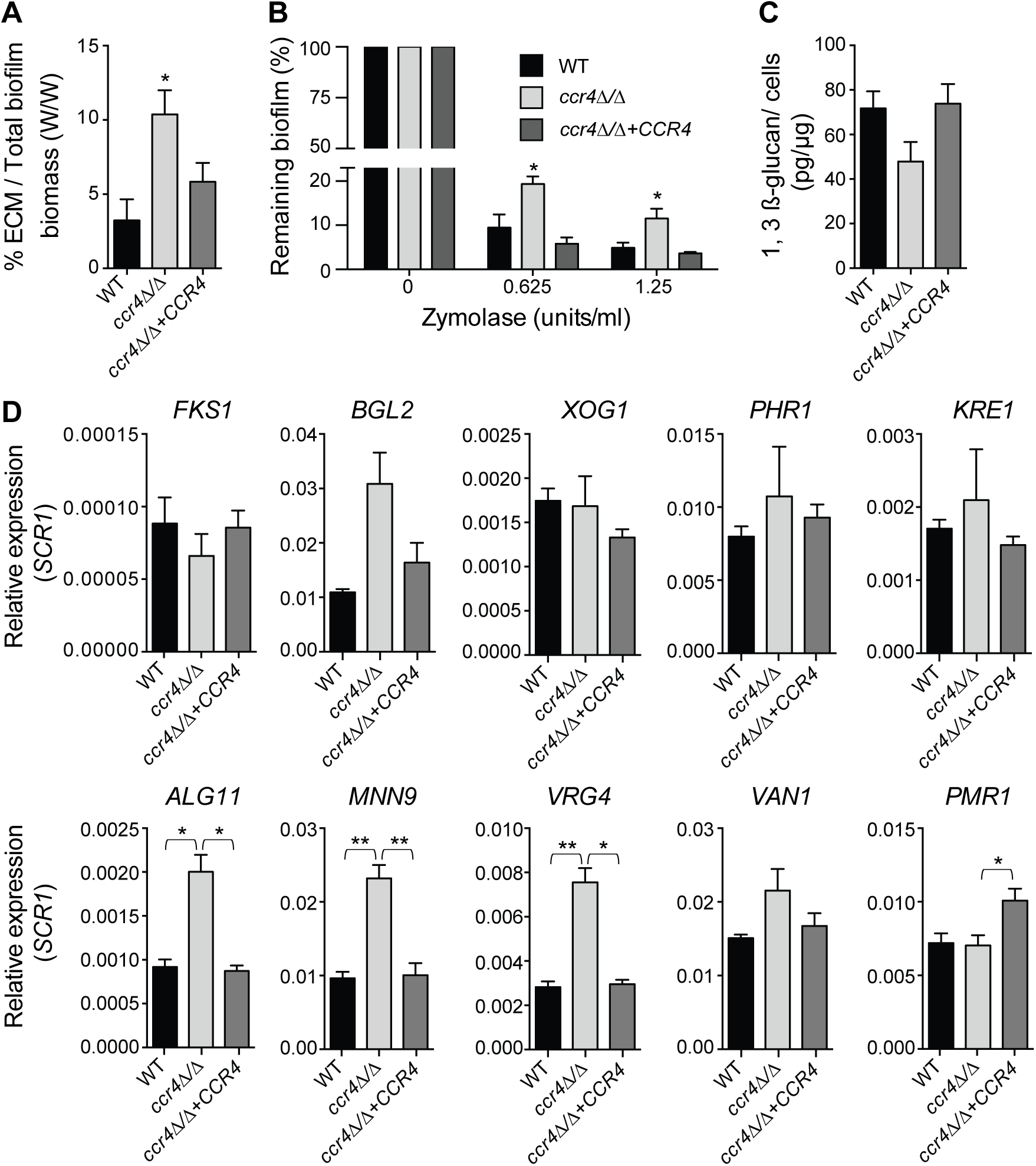 Effects of <i>CCR4</i> on the extracellular matrix and biofilm stability.