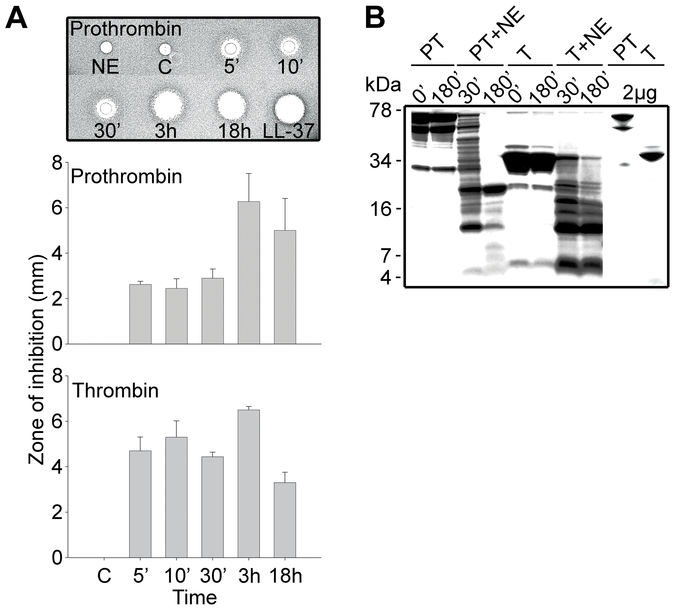 Generation of antimicrobial peptides by degradation of prothrombin and thrombin.