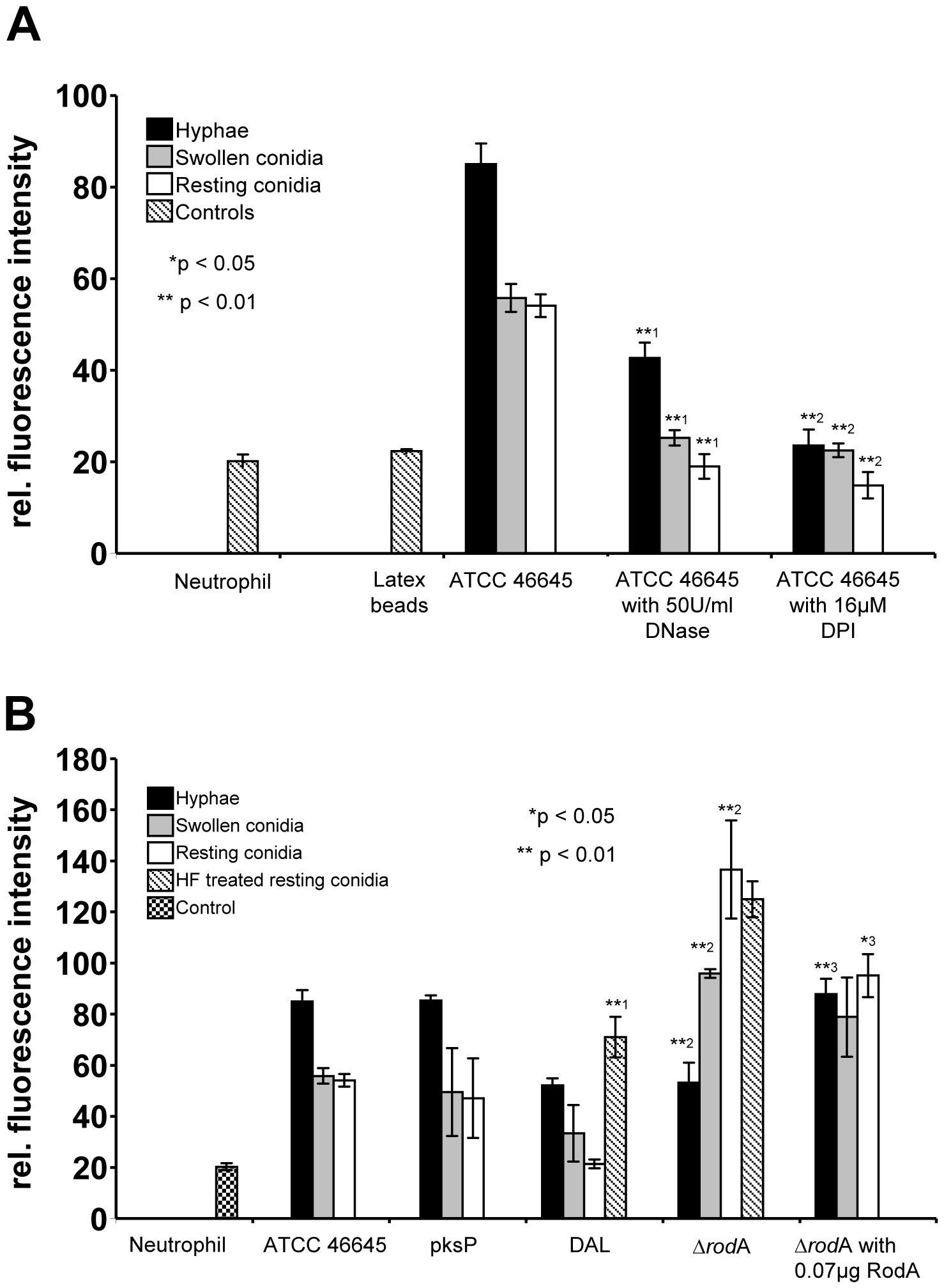 Detection of extracellular DNA by propidium iodide-staining after co-incubation of neutrophils with <i>Aspergillus</i> morphotypes.