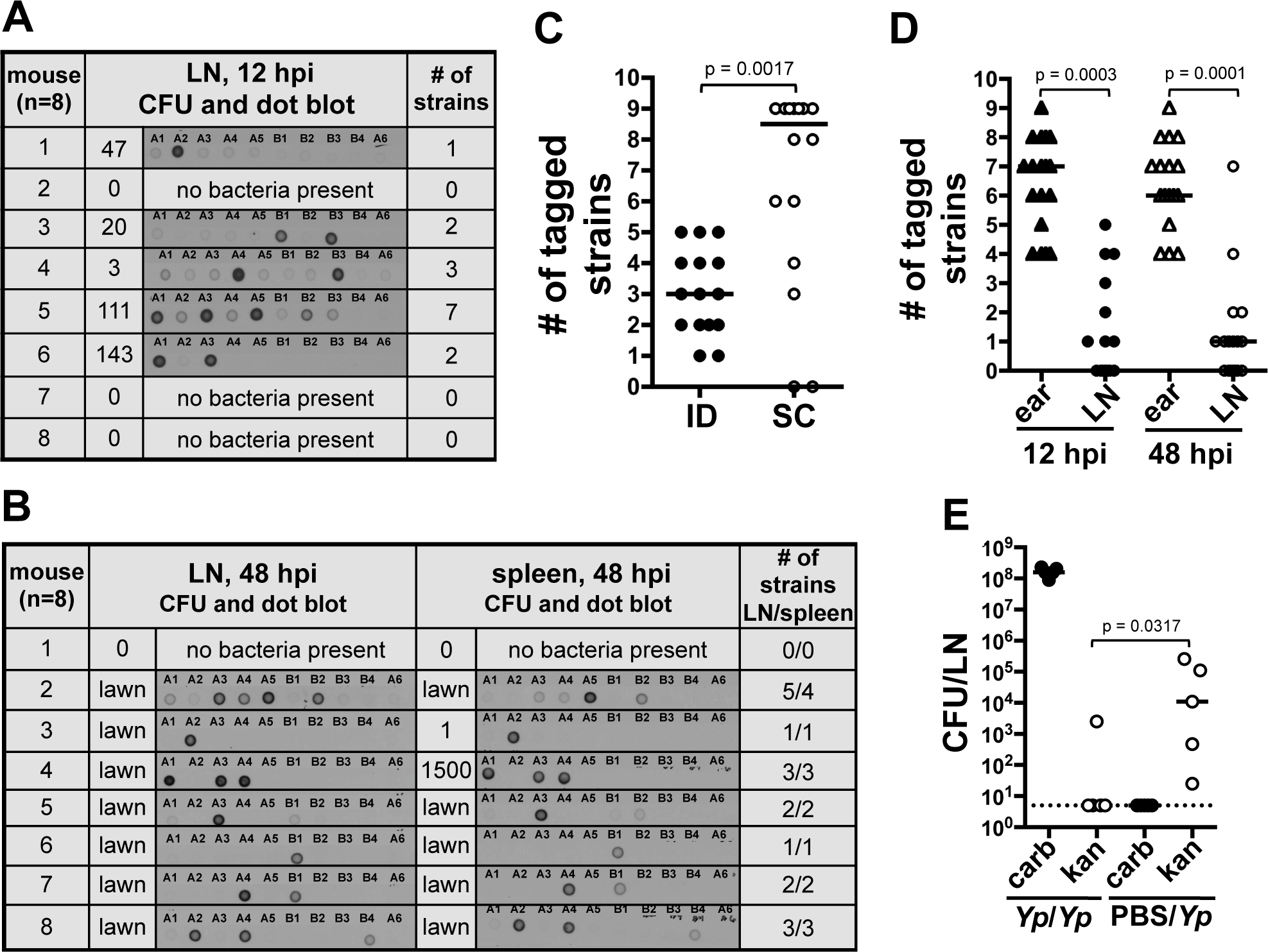 A bottleneck limits dissemination of <i>Y. pestis</i> to the draining LN.