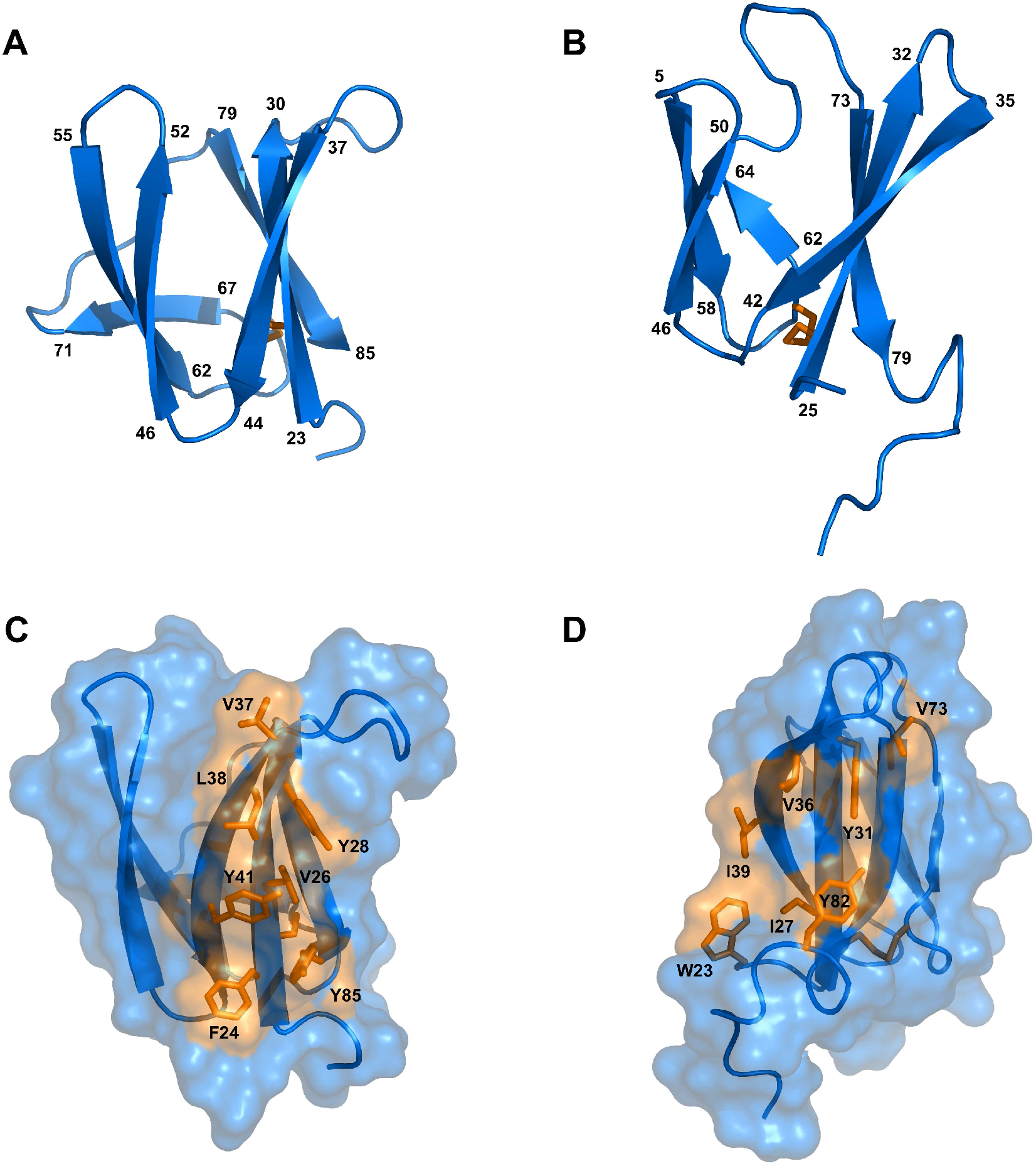 Solution structures of mature AVR-Pia and AVR1-CO39.