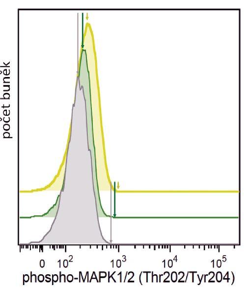 Ukázka Single Cell Phospho-Flow. Bazální hladina fosforylace signalizačního proteinu MAPK1/2 v pB-ALL blastech (žlutě), zdravých T lymfocytech (zeleně) a zdravých B lymfocytech (šedě) ve vzorku kostní dřeně pacientky ze skupiny B-other pB-ALL. Zvýšená fosforylace MAPK1/2 v leukemických blastech byla detekována metodou Single Cell Phospho-Flow. Defosforylace signalizačních proteinů (včetně MAPK1/2) může být následně využito jako znaku senzitivity na inhibitory tyrosinových kináz.