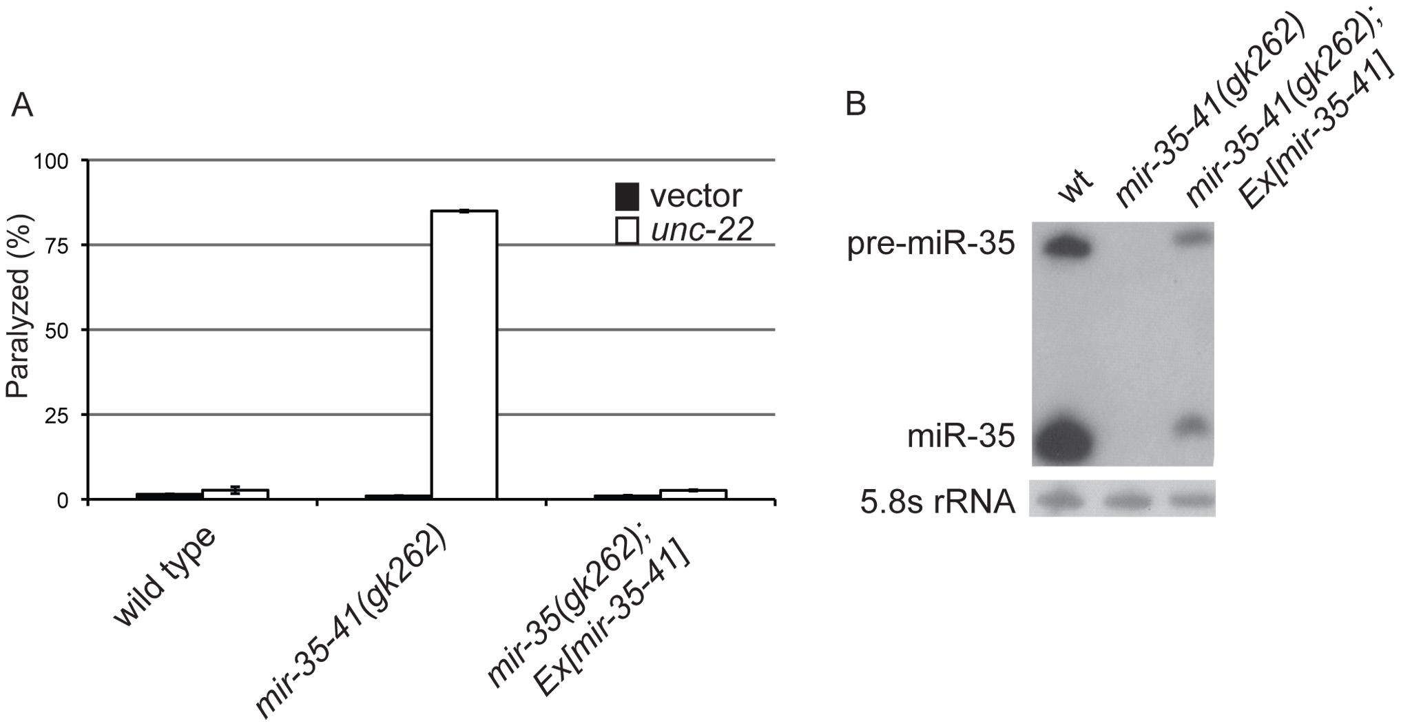 Deletion of the <i>mir-35-41</i> miRNA cluster results in RNAi hypersensitivity.
