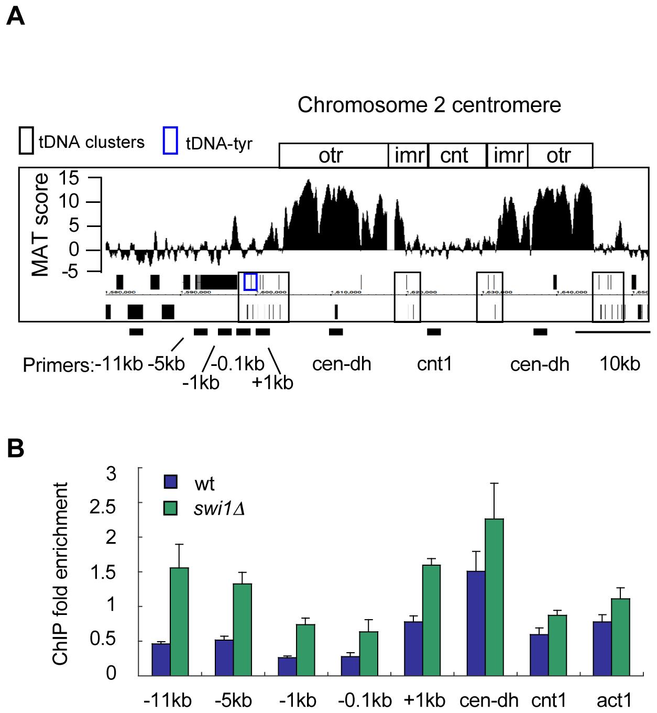 γH2A accumulates near tDNAs in the absence of Swi1.