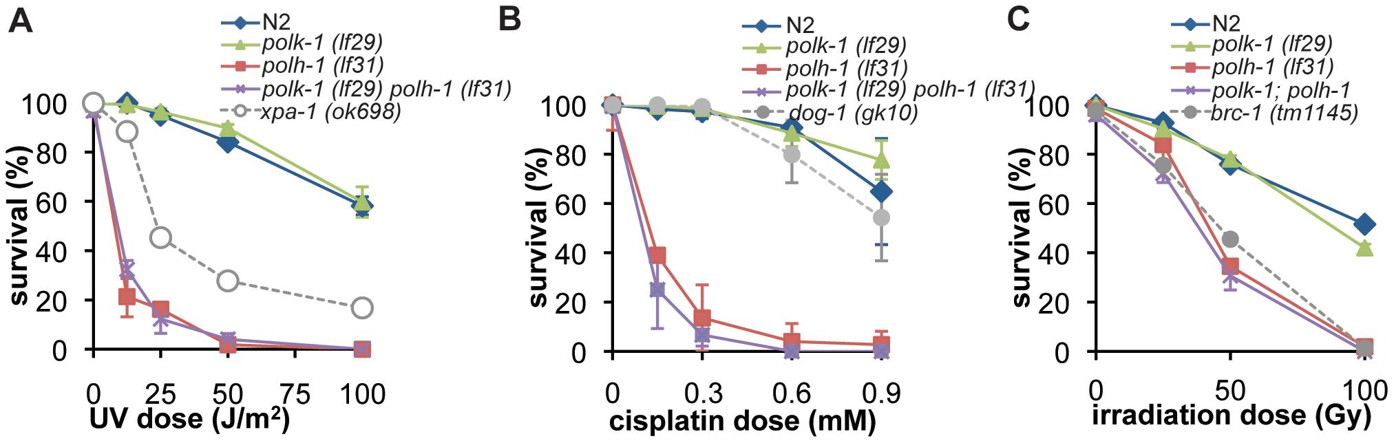 Germline sensitivity of <i>polh-1</i> and <i>polk-1</i> mutants to different sources of DNA damage.