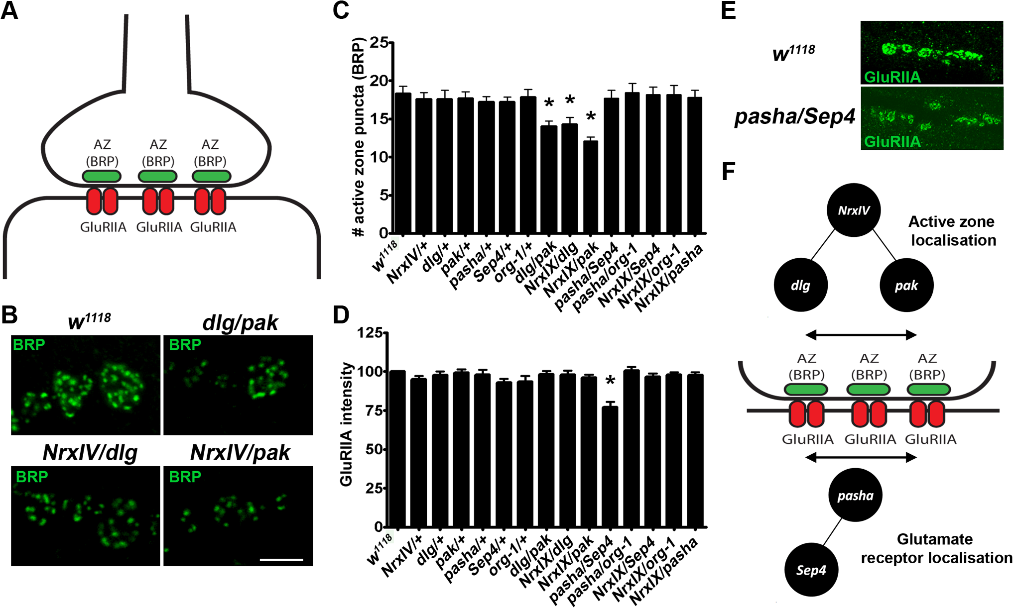 Different genetic interactions effect distinct synaptic defects suggesting that distinct molecular aetiologies underlie ASD.
