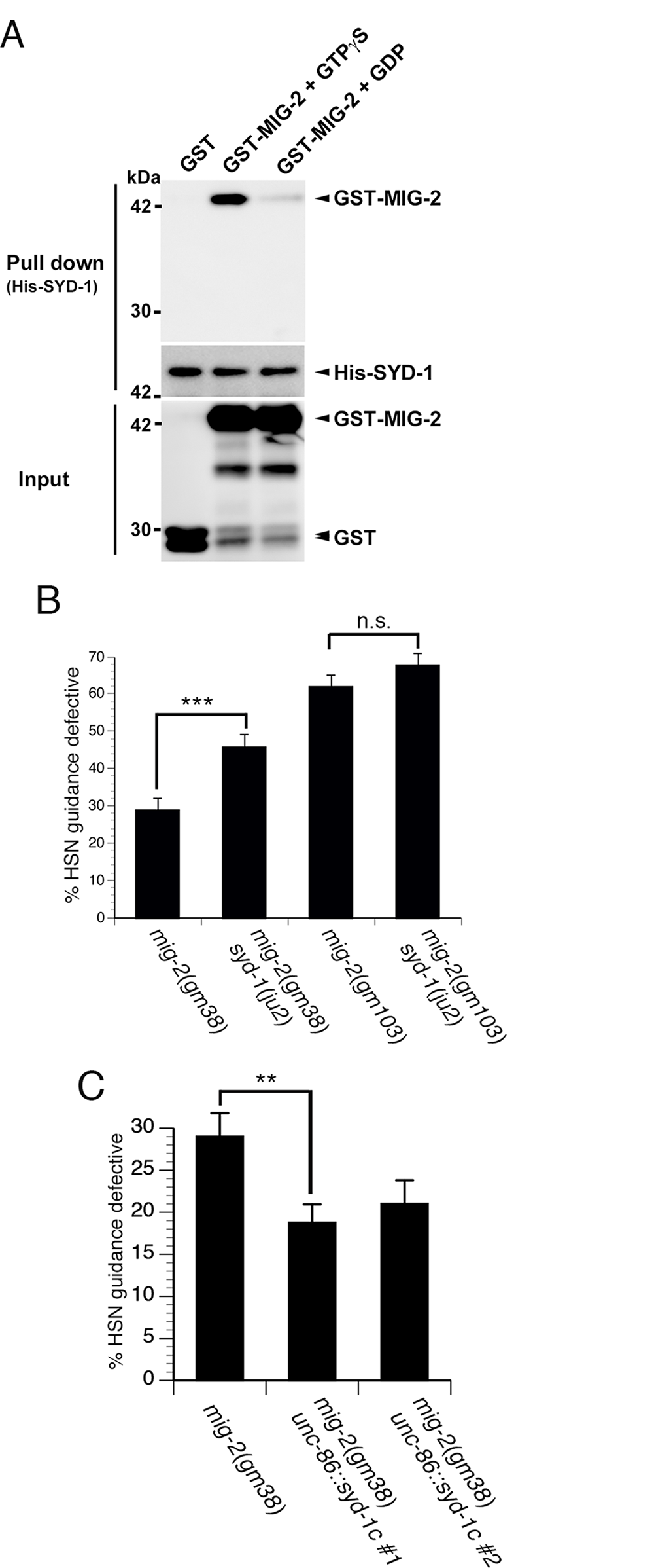 SYD-1 promotes axon guidance by negatively regulating the MIG-2 GTPase.